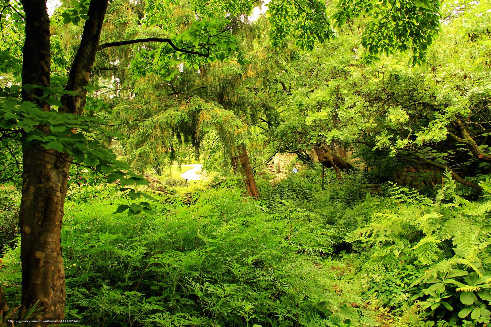 Скачать обои сад,  деревья,  природа,  зелень бесплатно для рабочего стола в разрешении 2835x1890 — картинка №499997