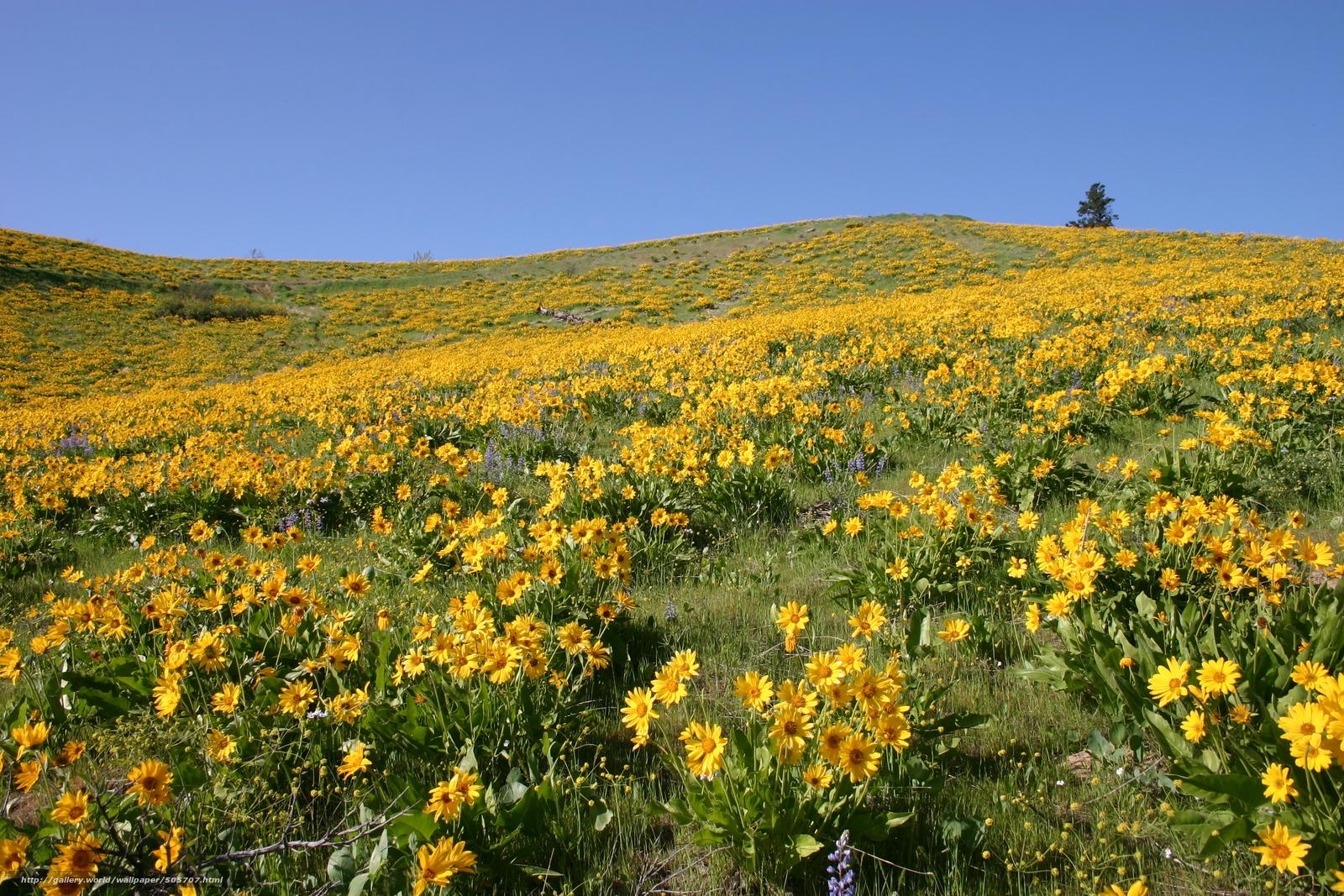 Скачать обои поле,  цветы,  пейзаж бесплатно для рабочего стола в разрешении 3072x2048 — картинка №505707