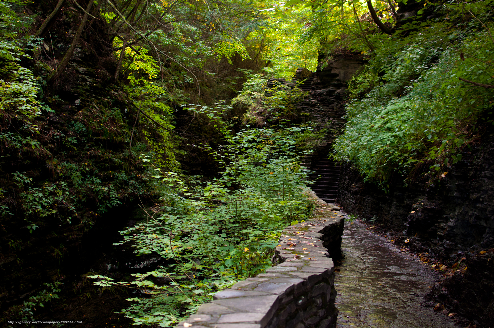 scaricare gli sfondi foresta,  traccia,  fase,  natura Sfondi gratis per la risoluzione del desktop 4288x2848 — immagine №505723