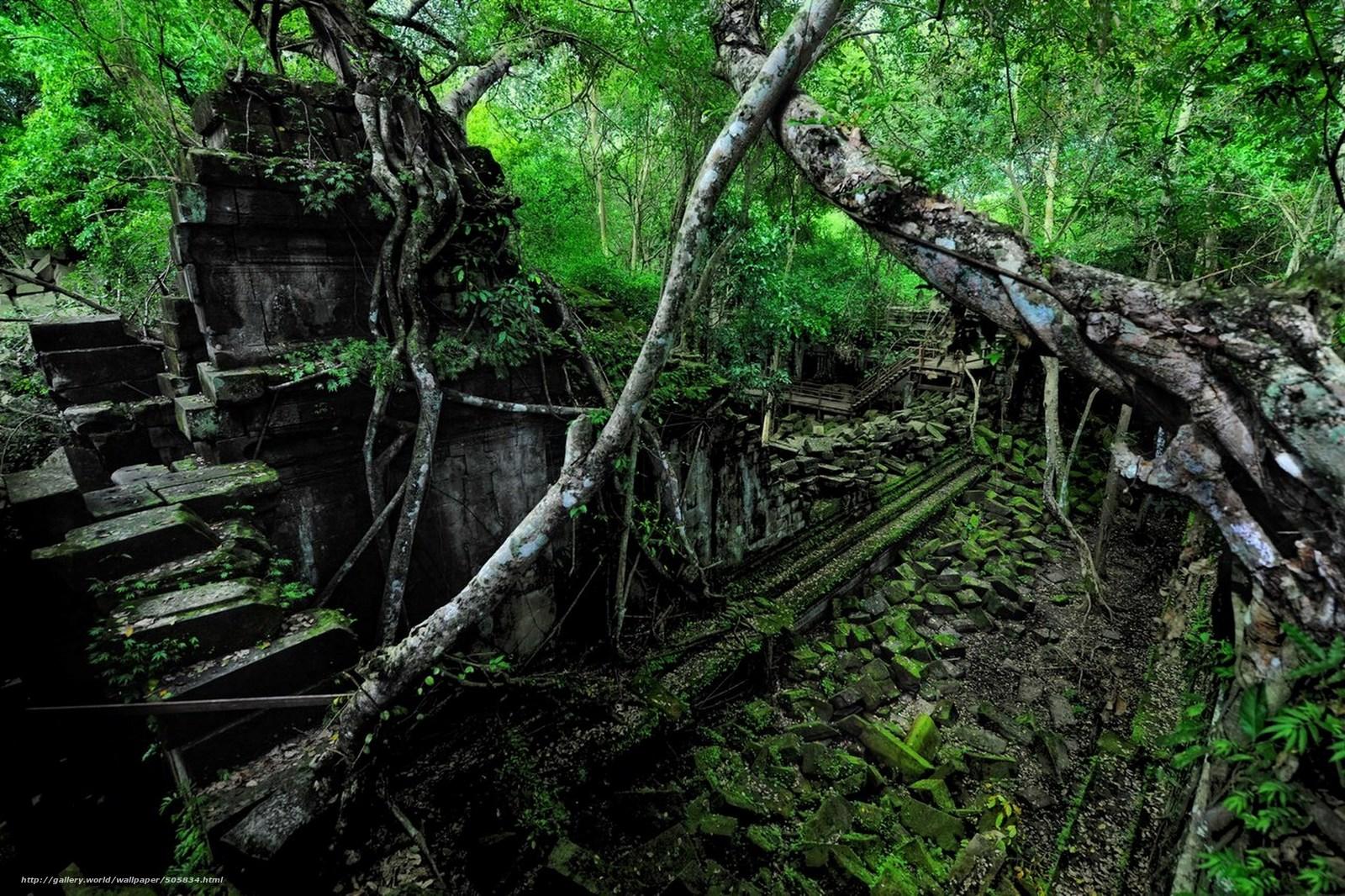 Скачать обои руины,  лес,  пейзаж бесплатно для рабочего стола в разрешении 2560x1706 — картинка №505834