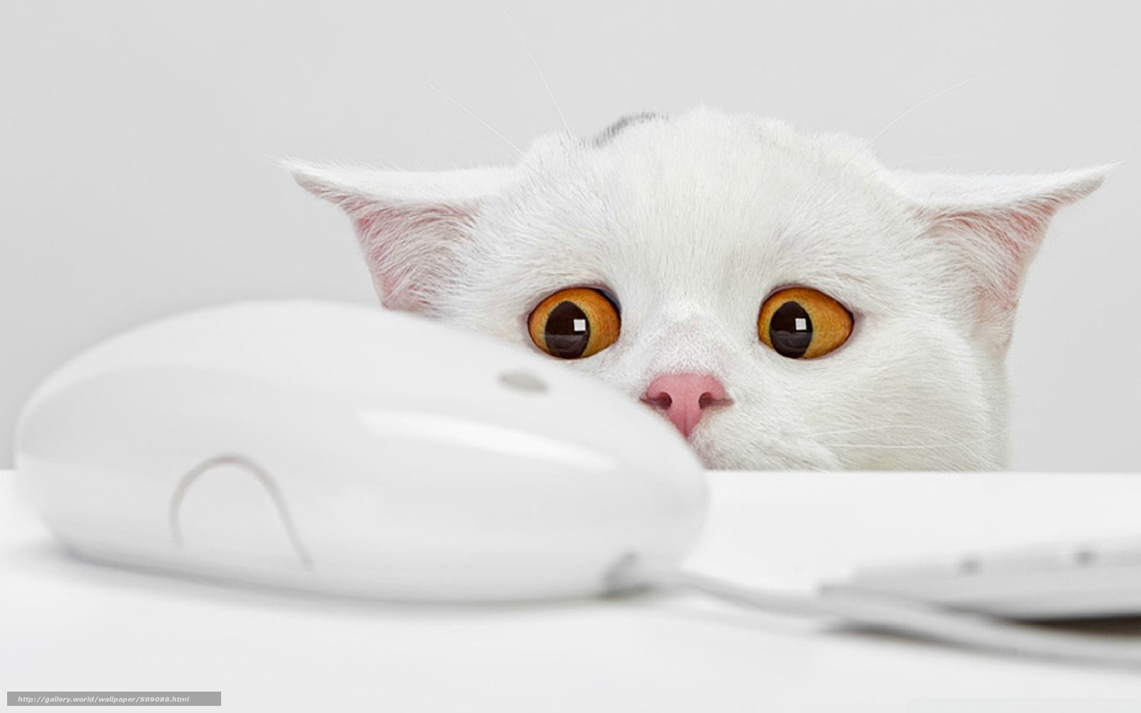 scaricare gli sfondi gatto,  Mouse del computer,   Sfondi gratis per la risoluzione del desktop 1920x1200 — immagine №509088