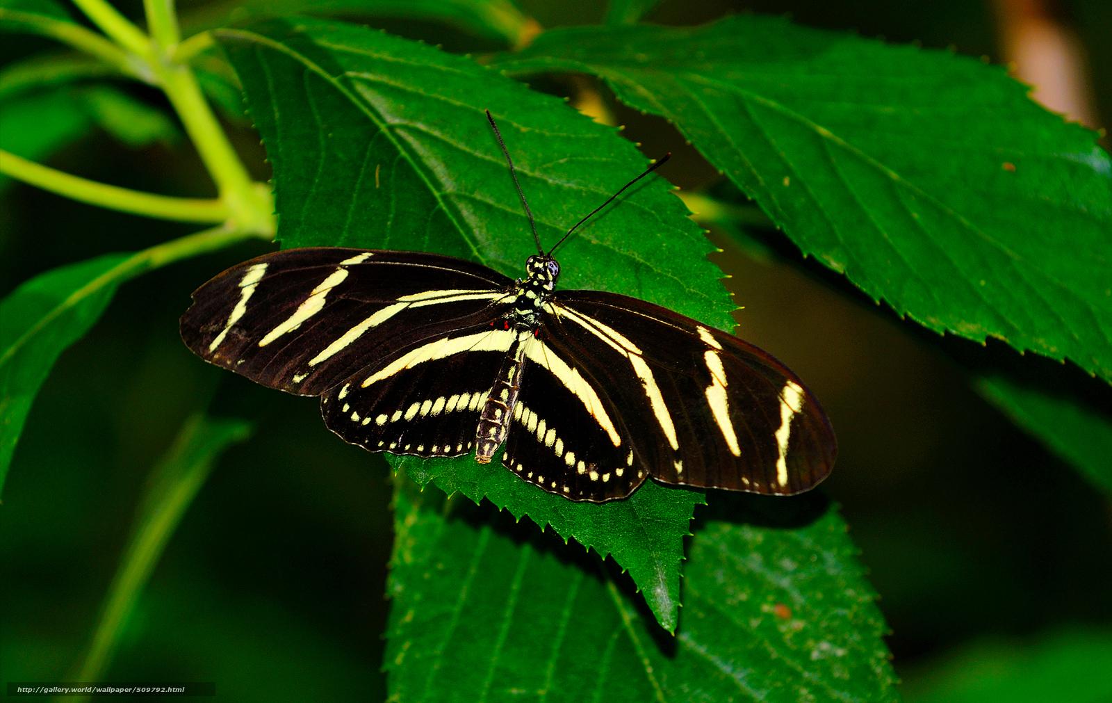 Скачать обои бабочка,  растения,  листья,  природа бесплатно для рабочего стола в разрешении 1900x1200 — картинка №509792