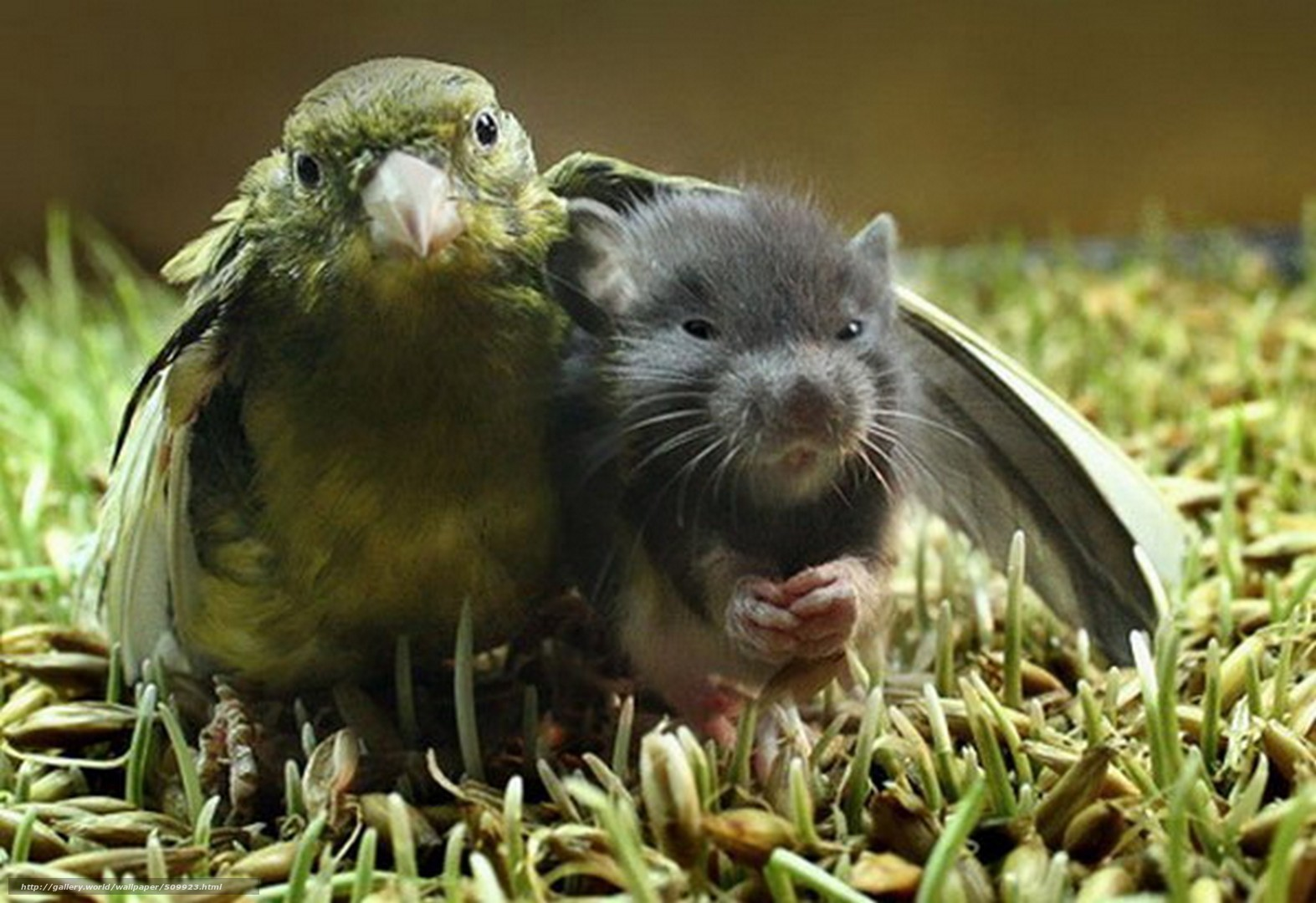 scaricare gli sfondi uccellino,  mouse,  Amici Sfondi gratis per la risoluzione del desktop 1573x1080 — immagine №509923