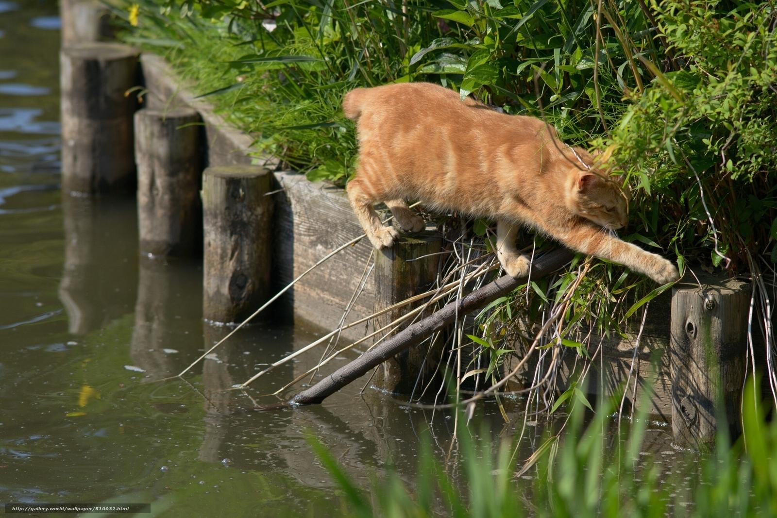Скачать обои рыжий кот,  переход,  ситуация,  вода бесплатно для рабочего стола в разрешении 1920x1280 — картинка №510032