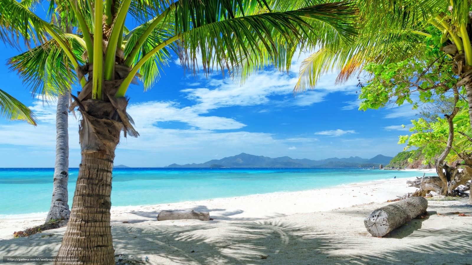 Scaricare Gli Sfondi Tropici Spiaggia Palma Sfondi Gratis Per La