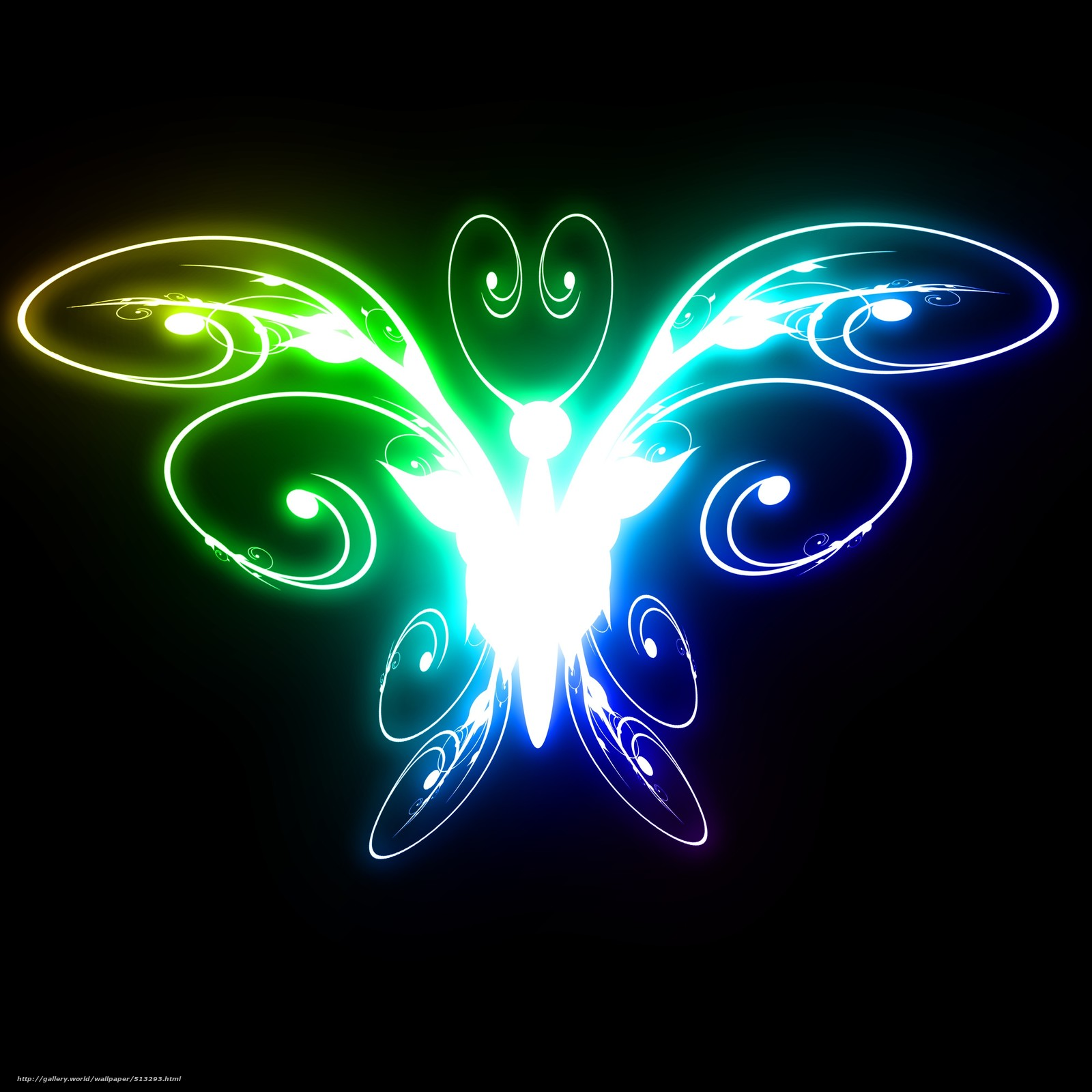 Download wallpaper color,  butterfly,  bright,  light free desktop wallpaper in the resolution 4000x4000 — picture №513293