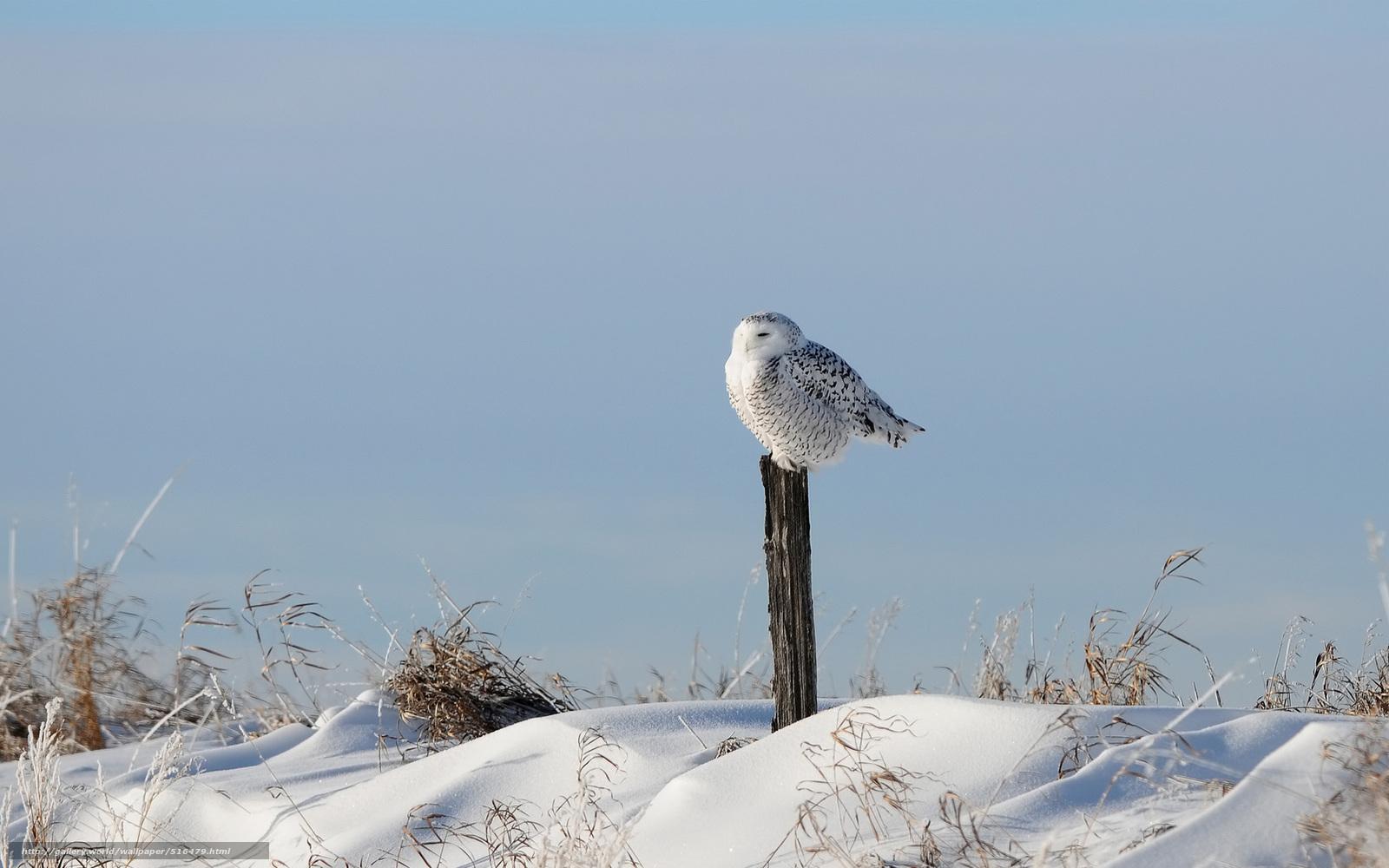 Download wallpaper bird,  snow,  column,  grass free desktop wallpaper in the resolution 1920x1200 — picture №516479