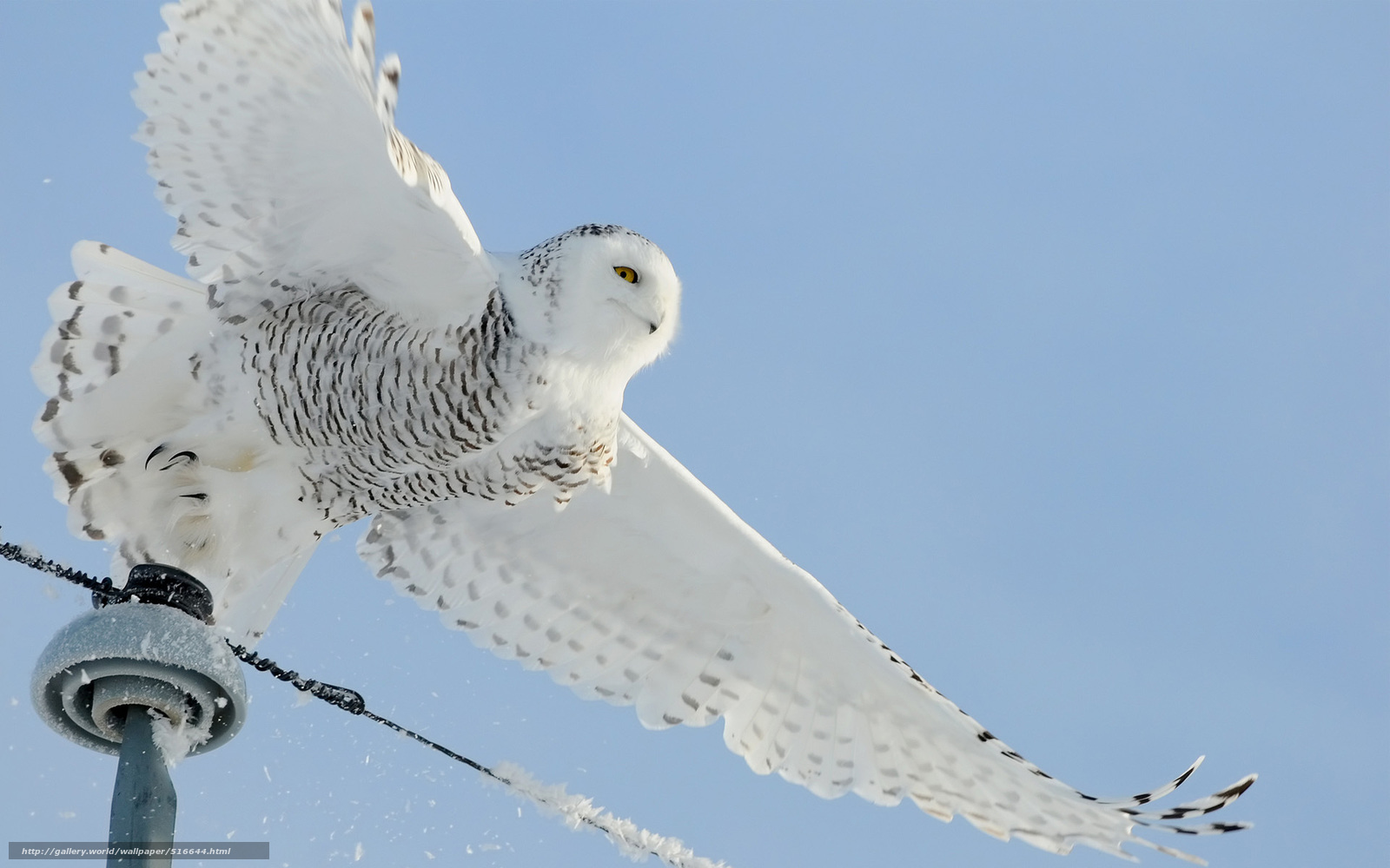 Download wallpaper bird,  snow,  Wire,  White free desktop wallpaper in the resolution 1920x1200 — picture №516644