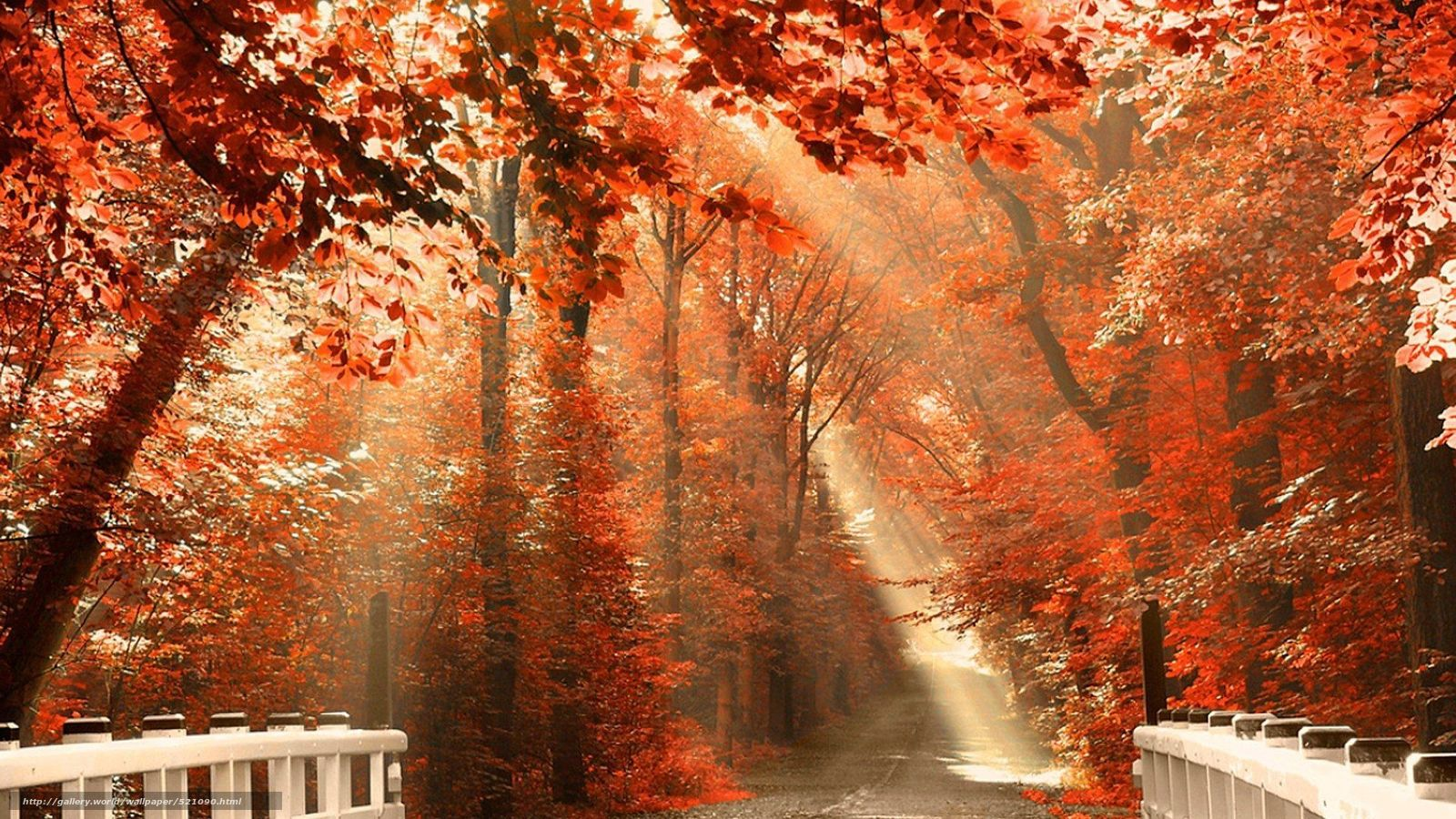 Beautiful Natural HD wallpapers  Allfreshwallpaper