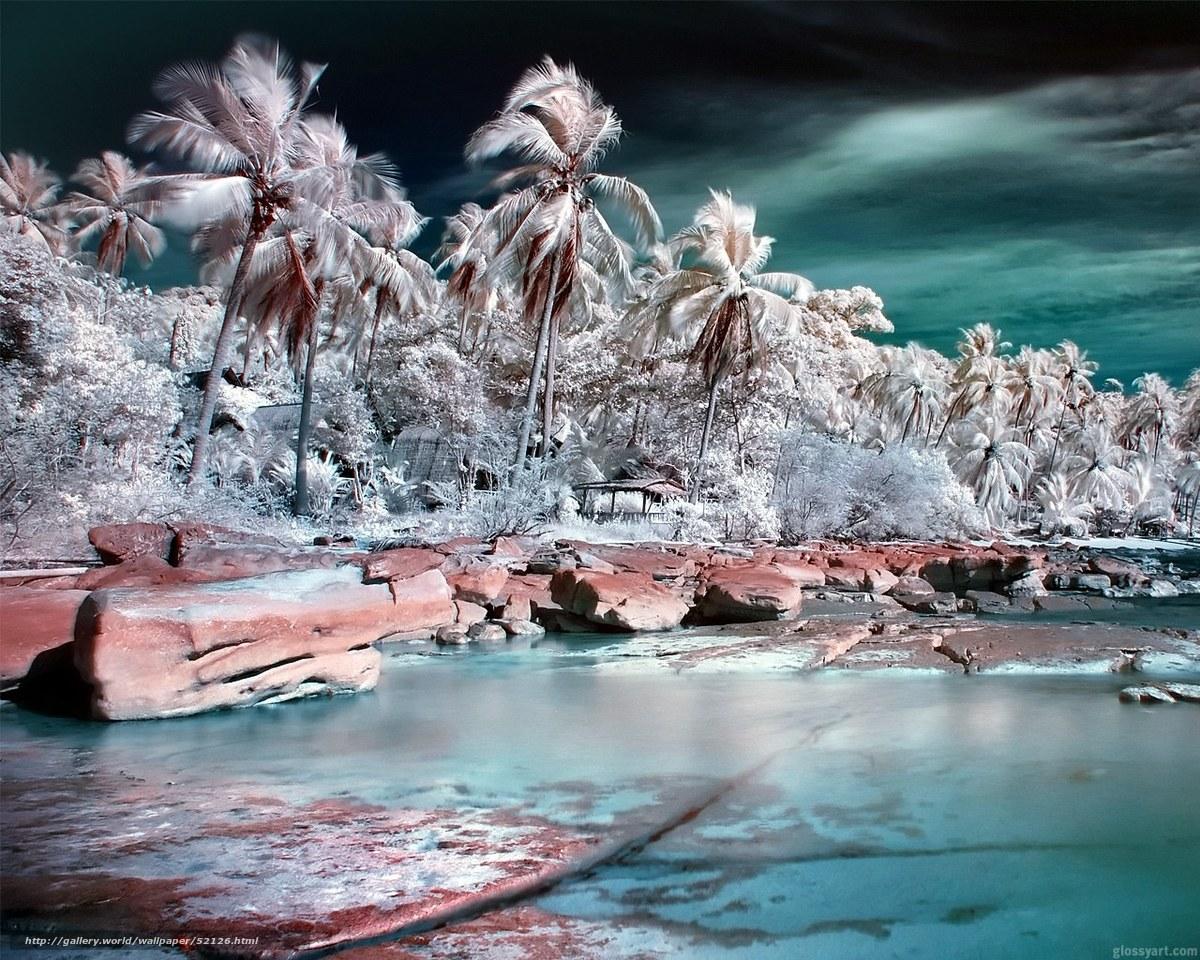 Descargar gratis Palms,  viento,  mar Fondos de escritorio en la resolucin 1280x1024 — imagen №52126