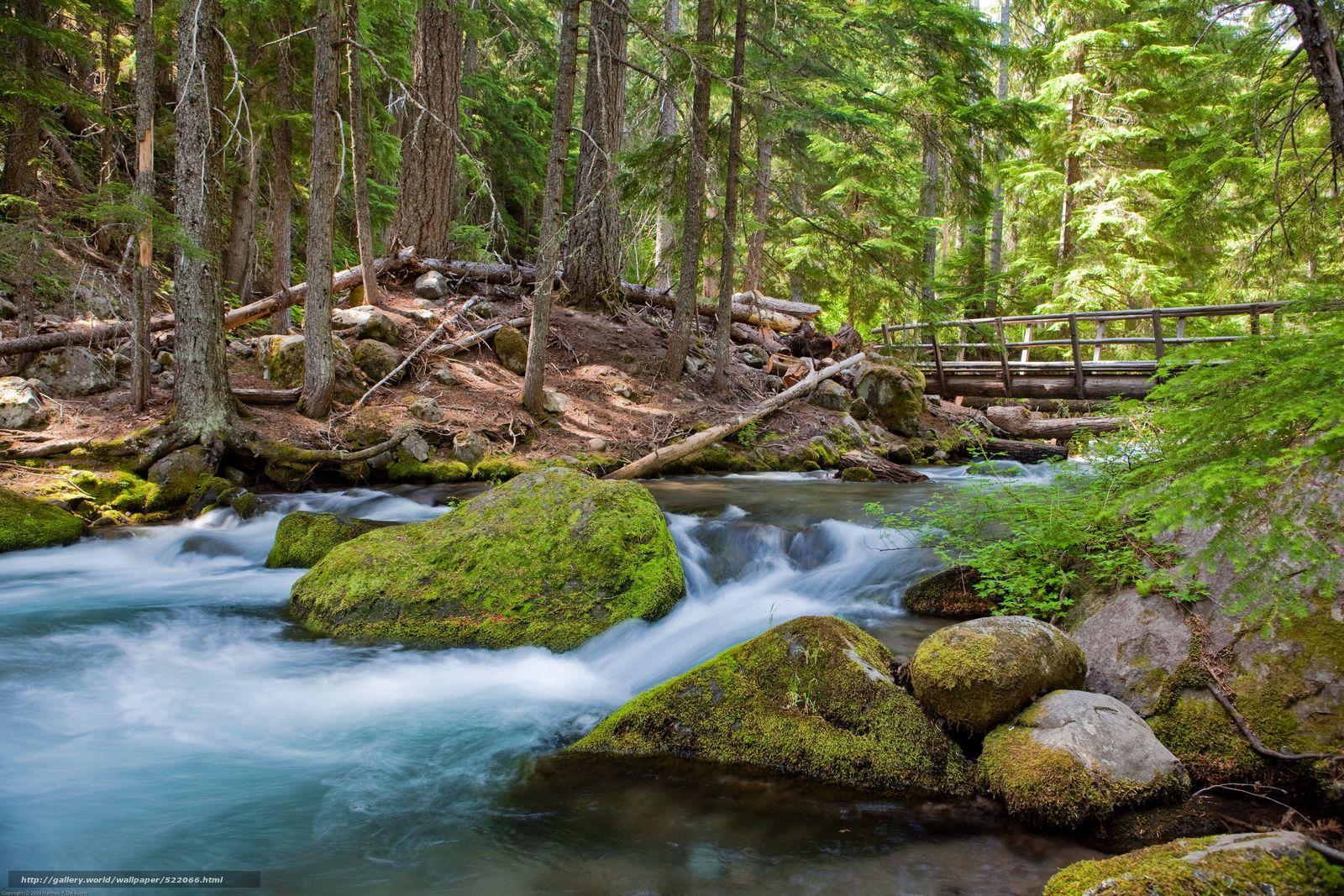 Скачать обои штат Орегон,  usa,  река,  лес бесплатно для рабочего стола в разрешении 5616x3744 — картинка №522066