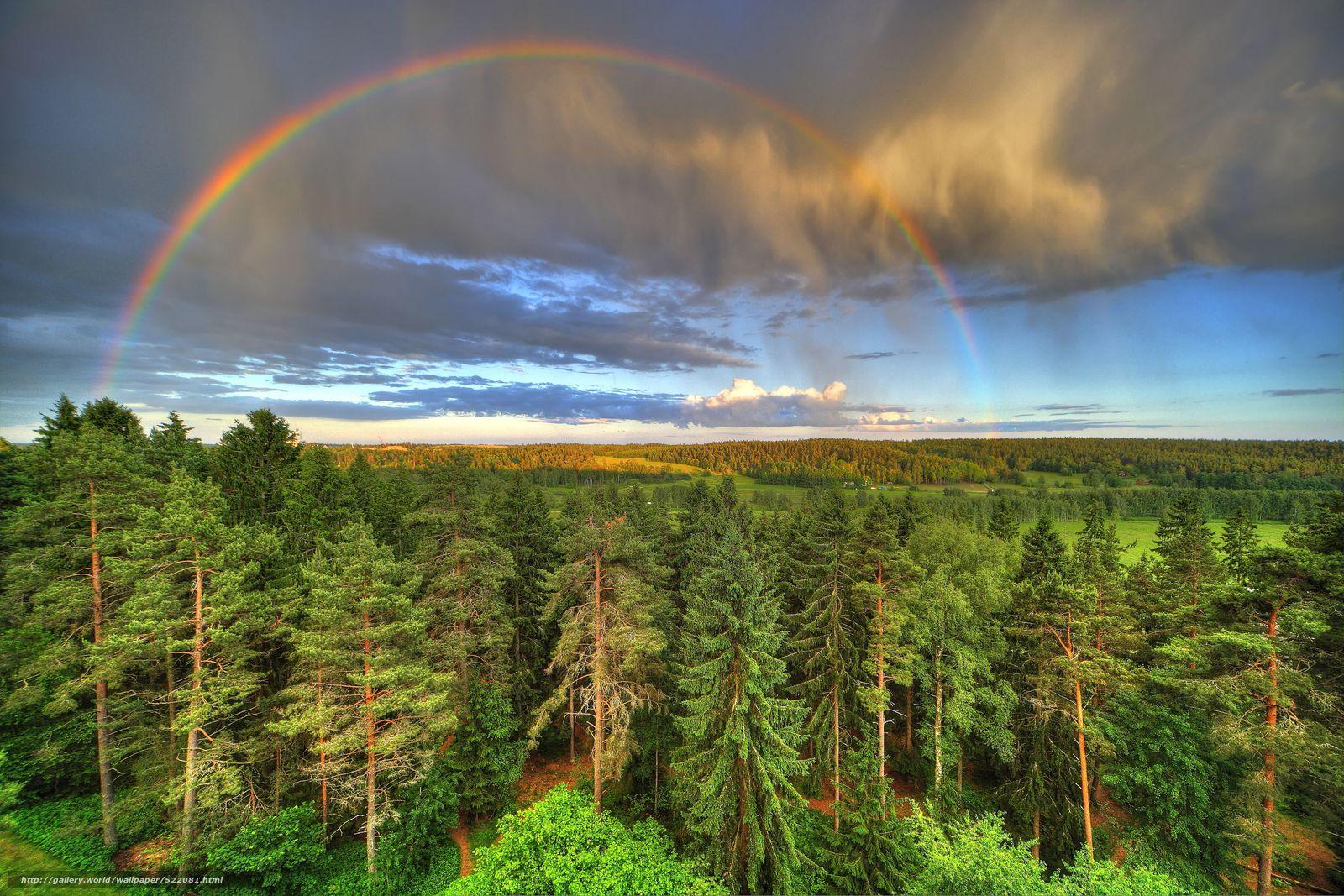 Скачать обои лес,  деревья,  небо,  радуга бесплатно для рабочего стола в разрешении 5315x3543 — картинка №522081