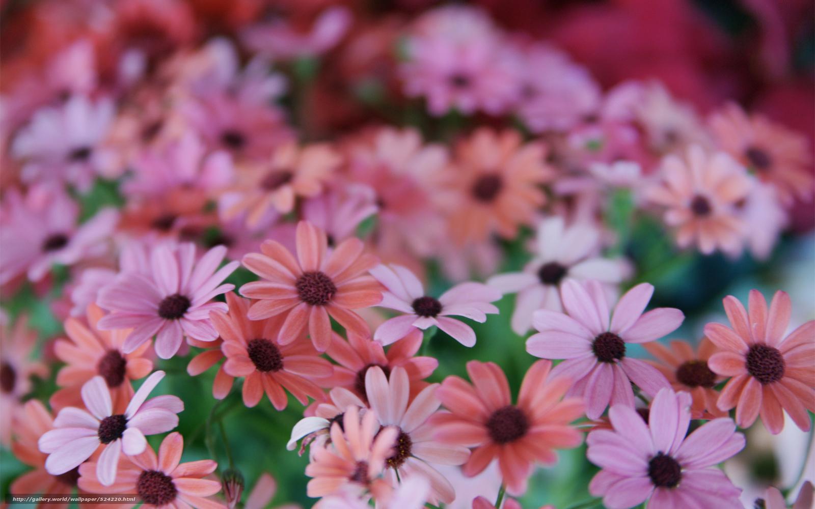 Изображения разных цветов фото
