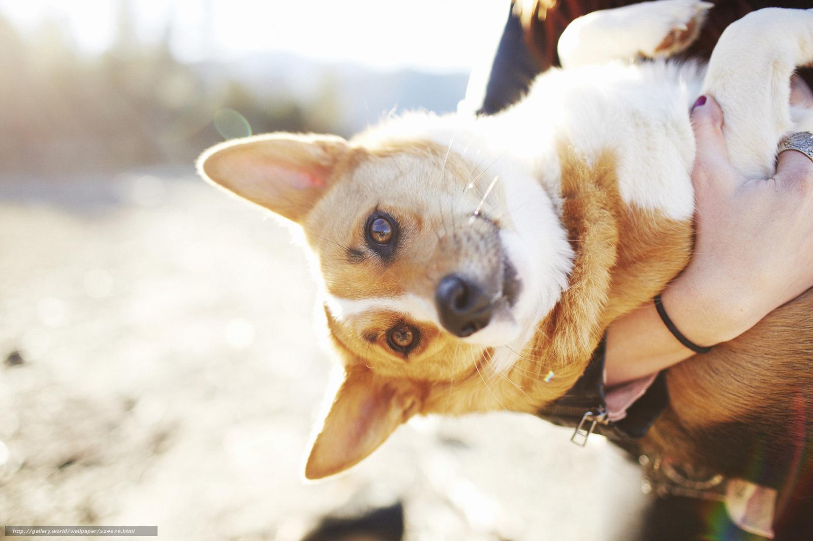 Скачать обои пёс,  настроение,  взгляд,  собака бесплатно для рабочего стола в разрешении 2048x1365 — картинка №524679