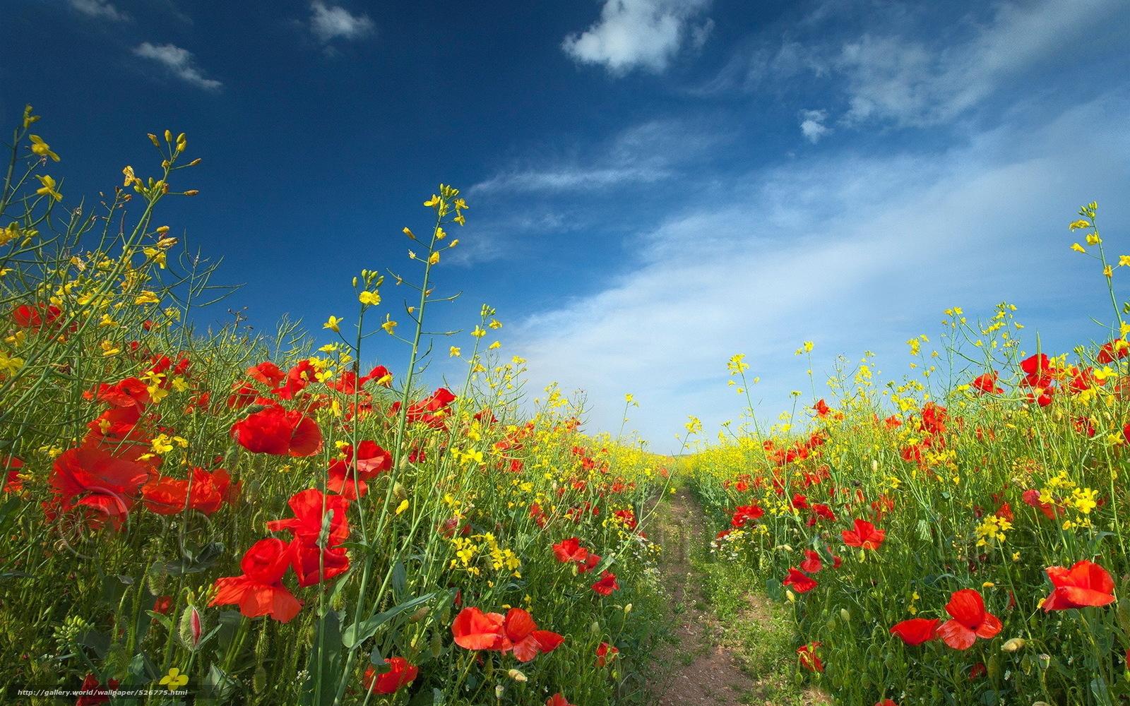 Download Wallpaper Flowers Field Summer Landscape Free Desktop