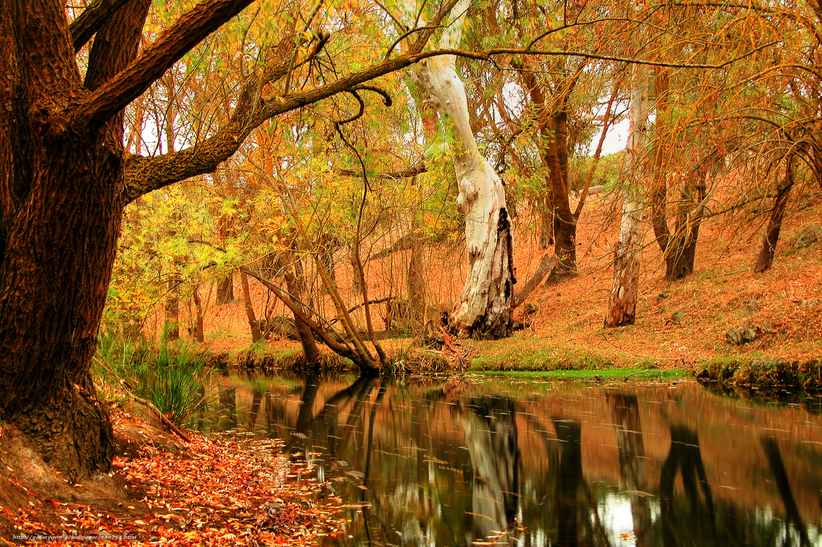 scaricare gli sfondi foresta,  autunno,  fiume,  fogliame Sfondi gratis per la risoluzione del desktop 2560x1704 — immagine №530792