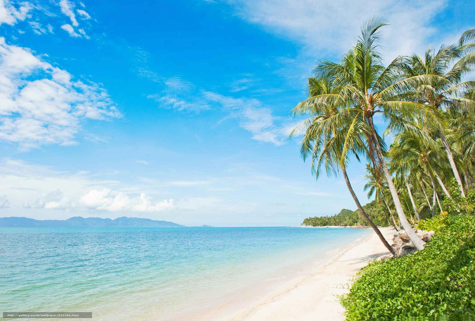 Scaricare gli sfondi tropicale spiaggia noce di cocco - Palma di cocco ...