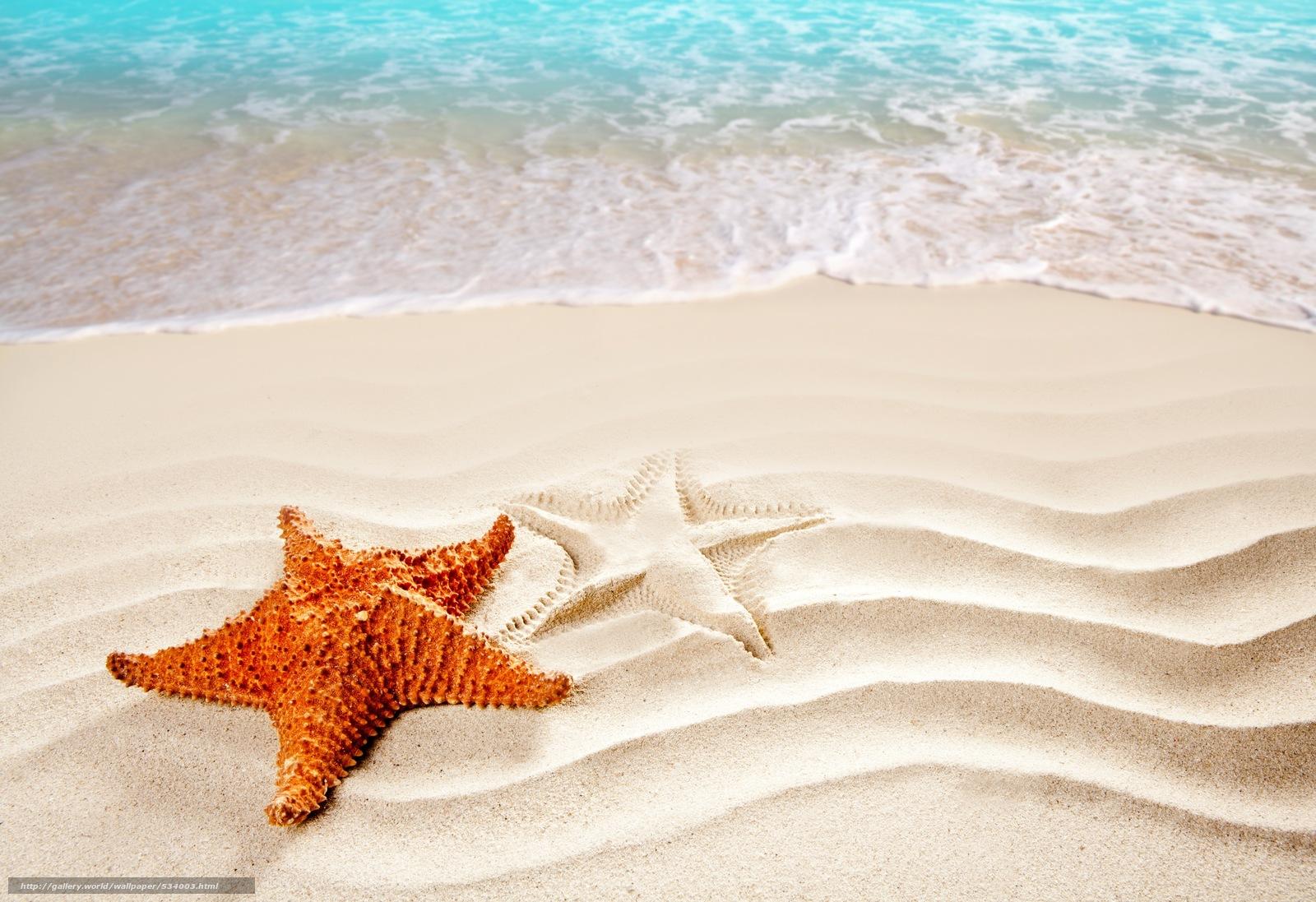 Scaricare Gli Sfondi Stella Di Mare Mare Sabbia Silhouette Sfondi