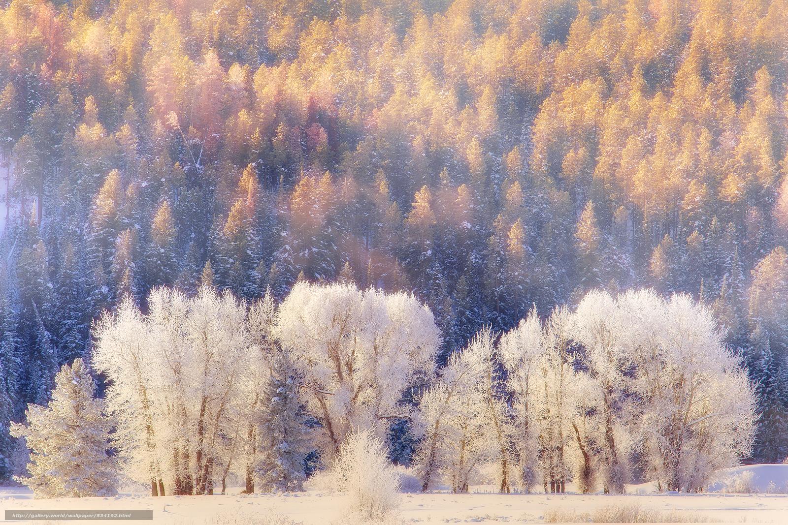 Download wallpaper winter dreams grand teton national for Sfondi invernali desktop