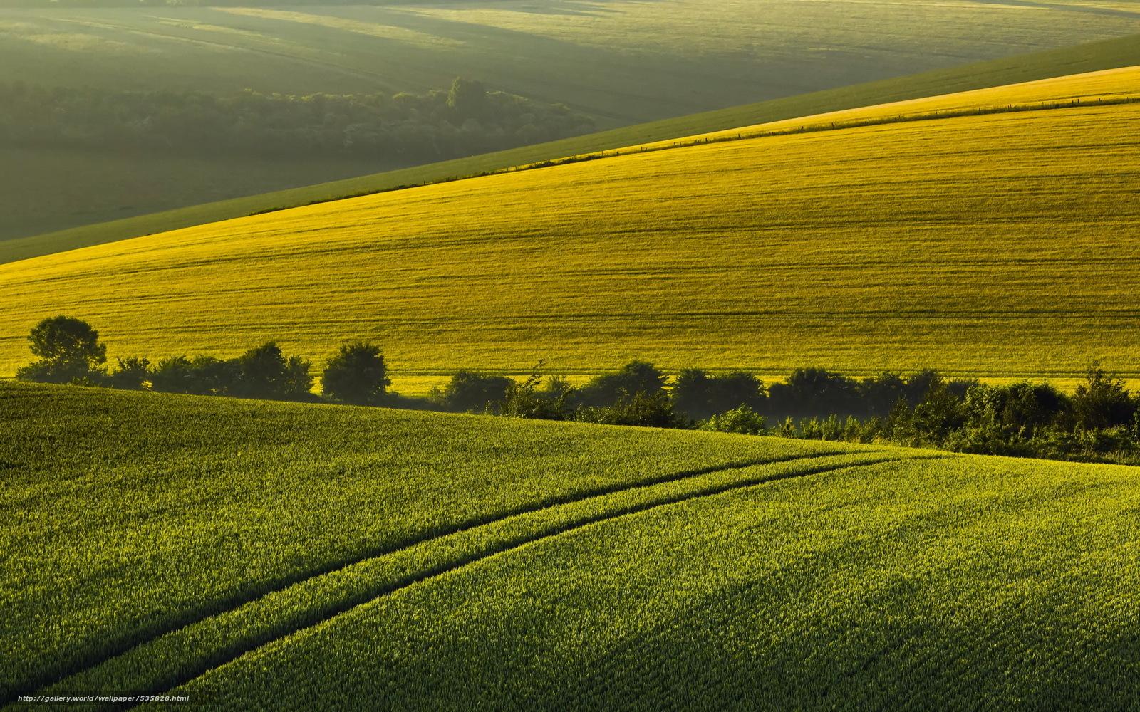 Download wallpaper morning,  field,  summer,  Hills free desktop wallpaper in the resolution 2560x1600 — picture №535828