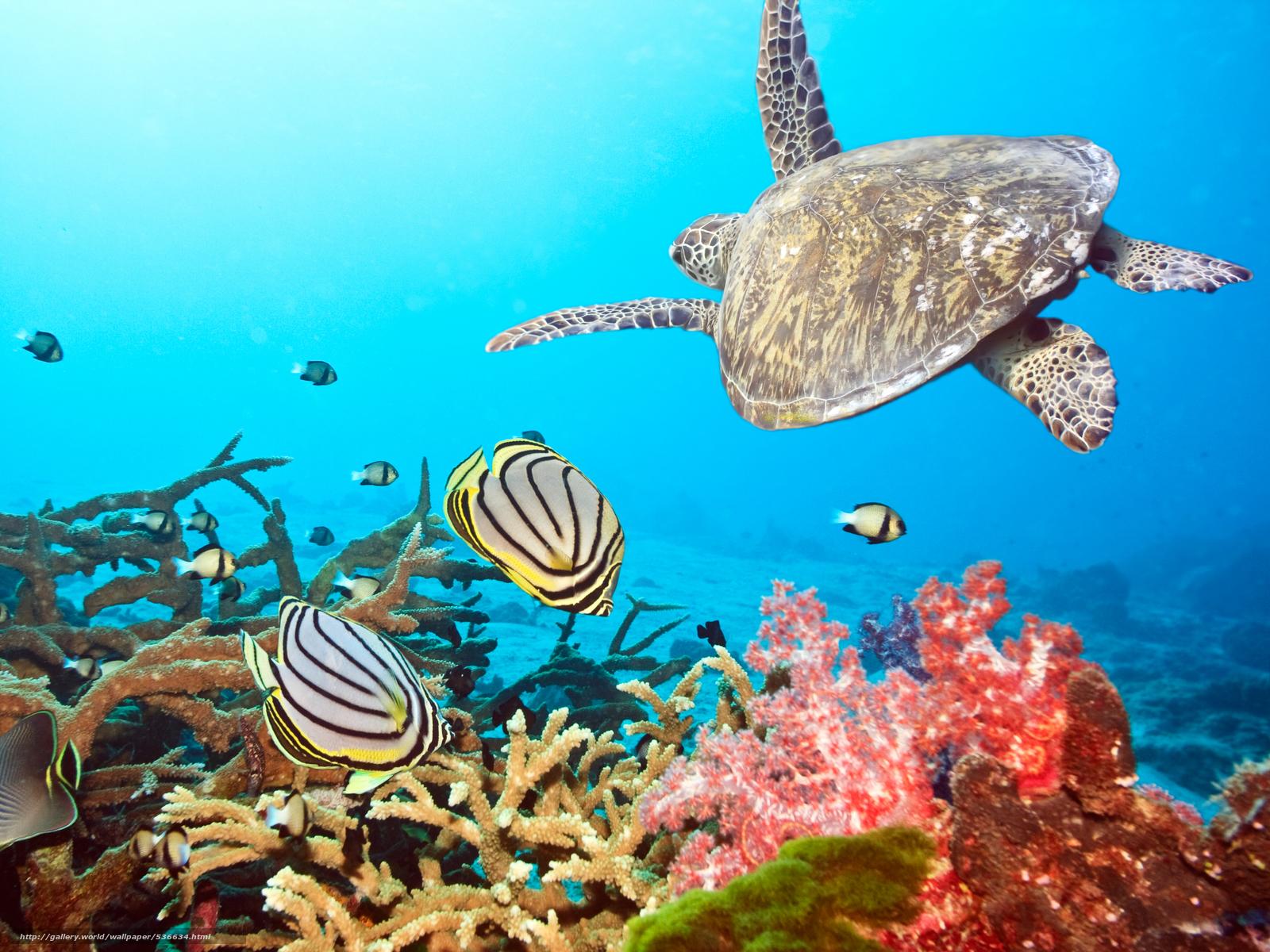 scaricare gli sfondi tartaruga,  pesce,  Coralli Sfondi gratis per la risoluzione del desktop 6912x5184 — immagine №536634
