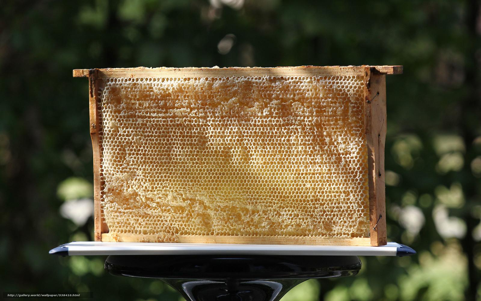 壁紙をダウンロード 蜂蜜,  ハニカム,  甘く デスクトップの解像度のための無料壁紙 2560x1600 — 絵 №538410