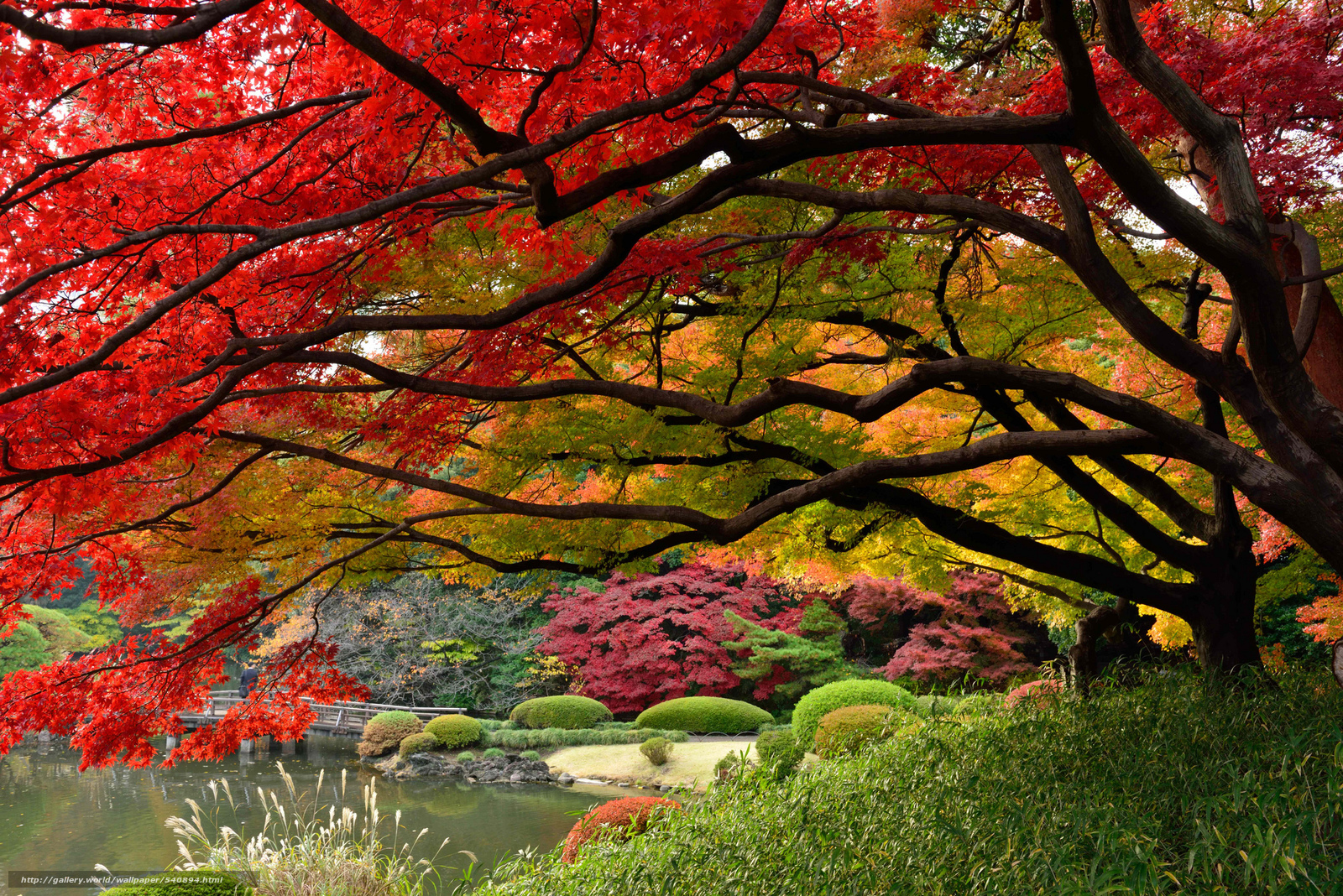 download wallpaper japan tokyo japanese garden colors