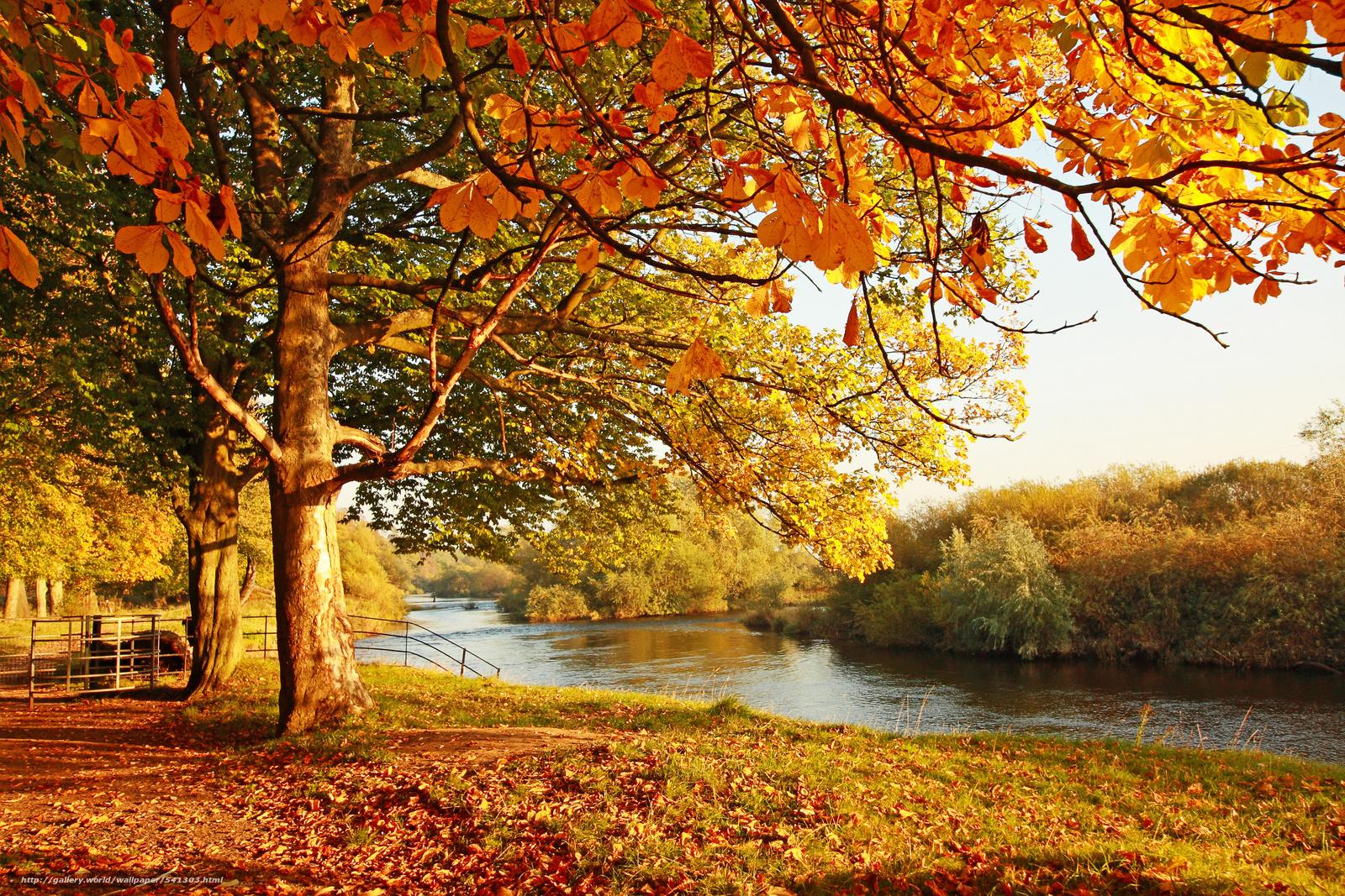 Download wallpaper landscape,  Dere,  foliage,  autumn free desktop wallpaper in the resolution 3900x2600 — picture №541303