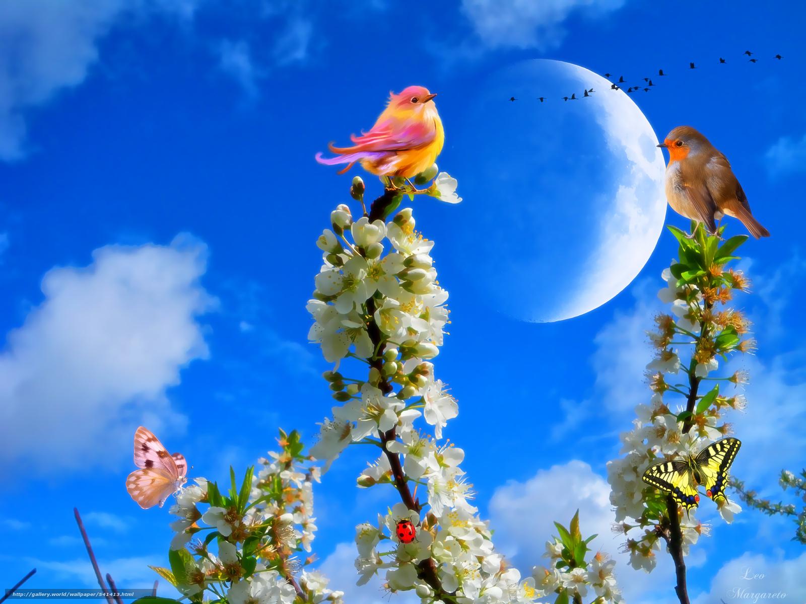 Tlcharger Fond d'ecran BRANCH,  Fleurs,  oiseaux,  papillon Fonds d'ecran gratuits pour votre rsolution du bureau 1800x1350 — image №541413