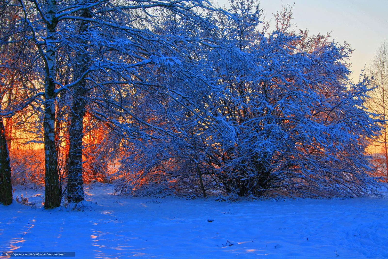 Scaricare gli sfondi inverno alberi tramonto sfondi for Sfondi gratis desktop inverno