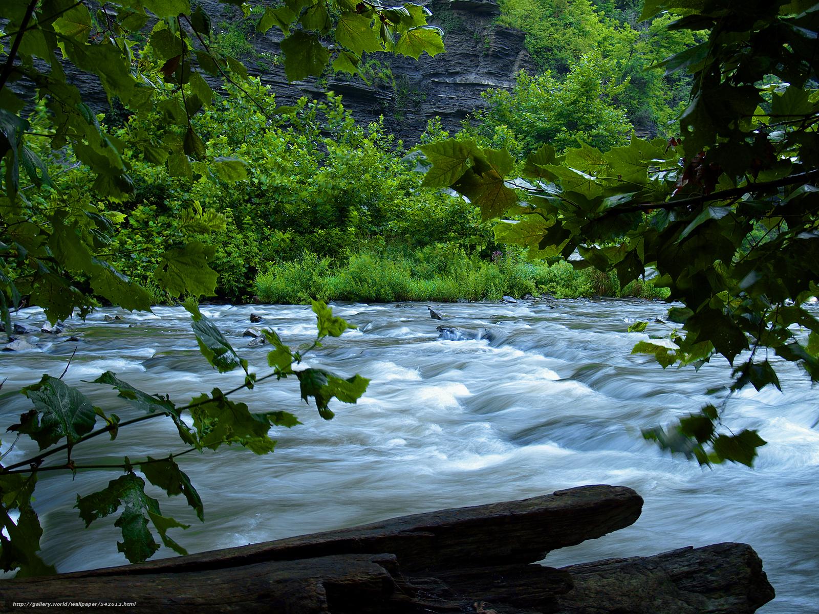 壁紙をダウンロード 川,  もちろん,  木,  自然 デスクトップの解像度のための無料壁紙 3200x2400 — 絵 №542612
