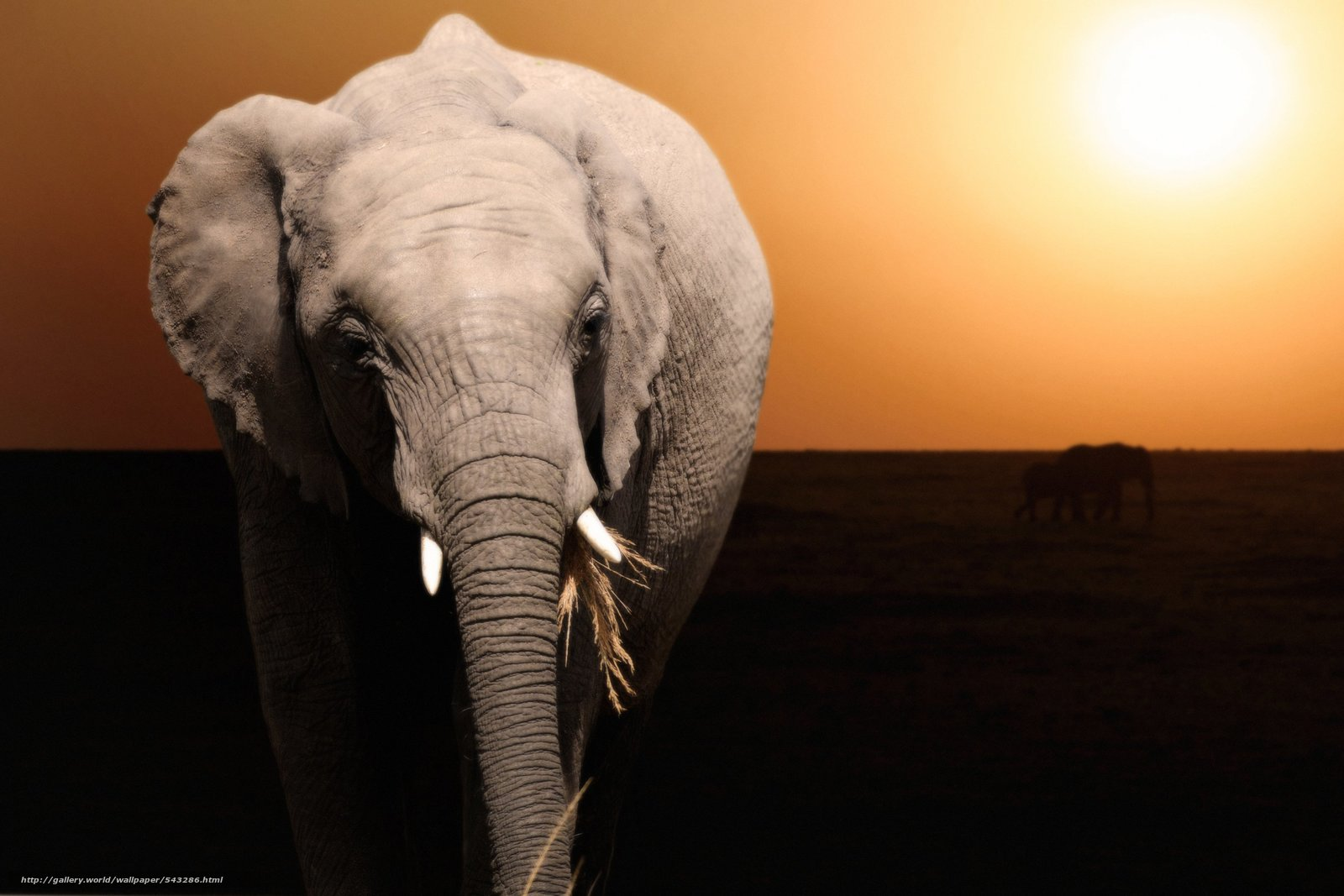 Download wallpaper sunset,  elephant,  animal free desktop wallpaper in the resolution 2800x1867 — picture №543286