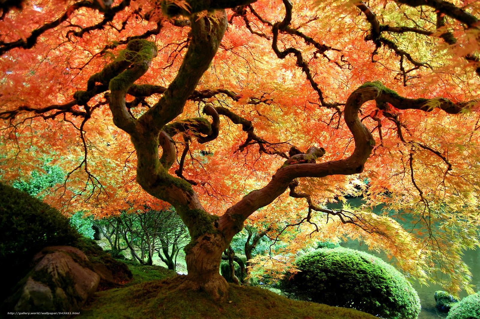 Tlcharger fond d 39 ecran jardin japonais portland arbres paysage fonds d 39 ecran gratuits pour - Arbre pour jardin japonais ...