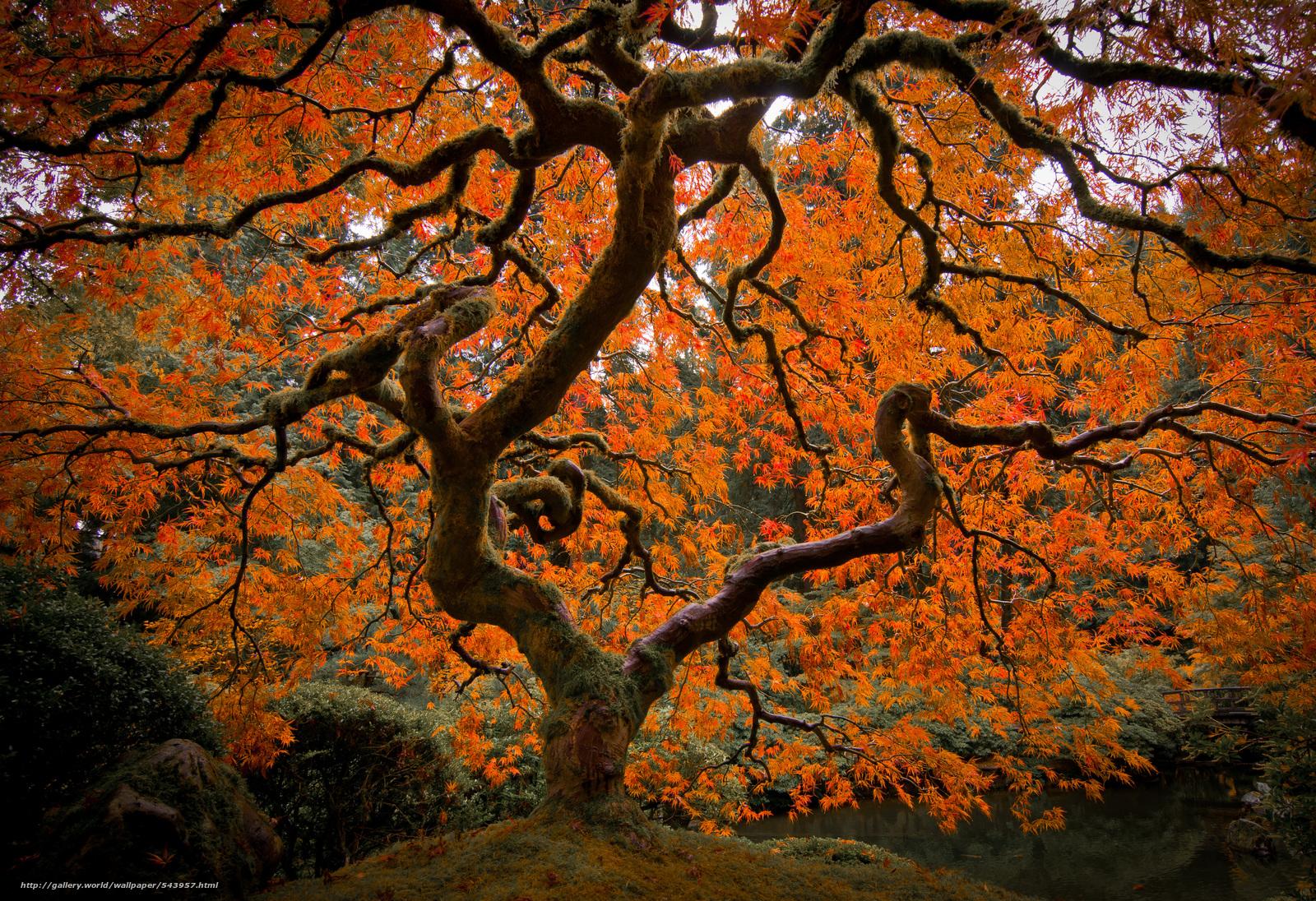 Tlcharger fond d 39 ecran jardin japonais portland arbres for Arbres jardin japonais