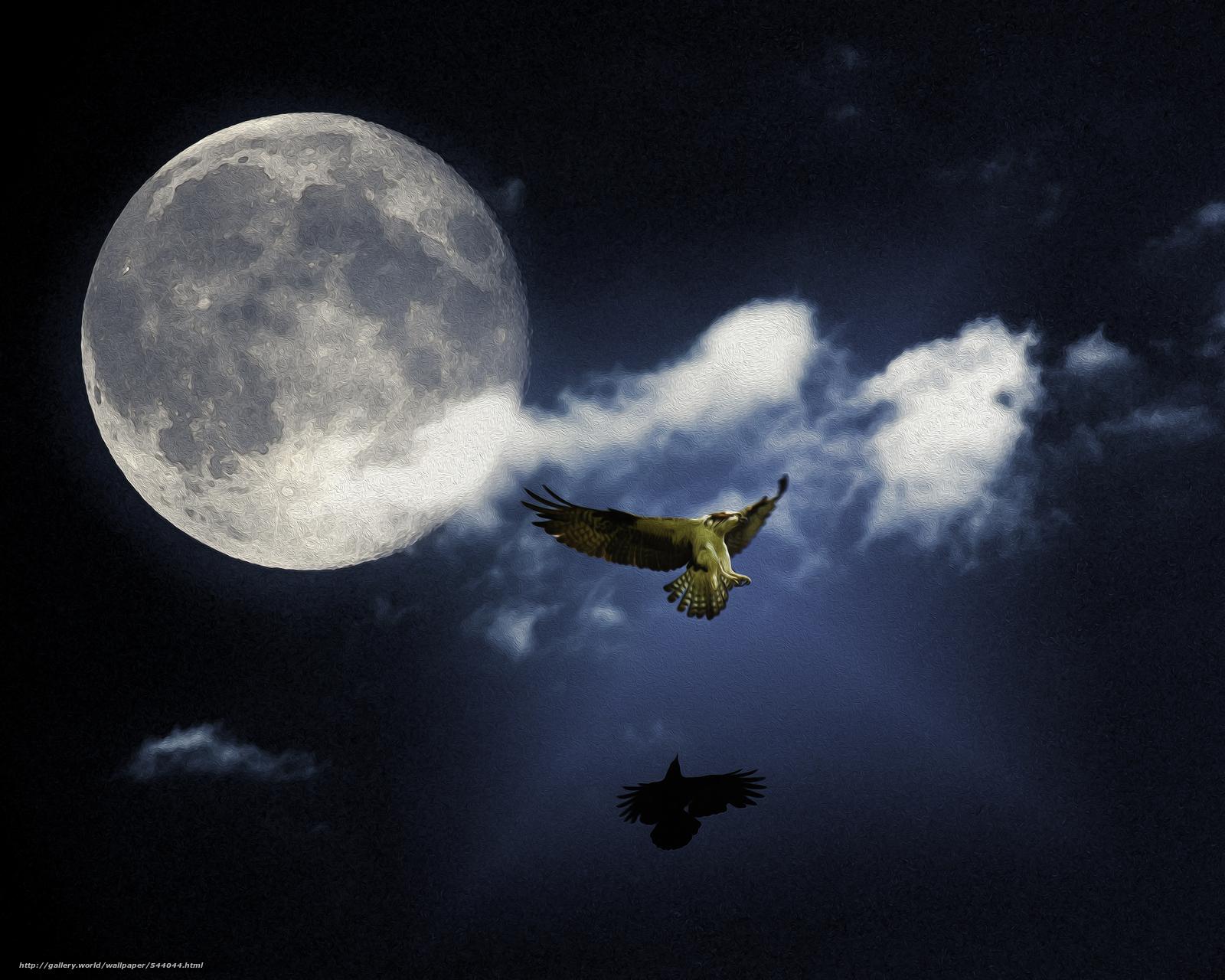 scaricare gli sfondi Moon Dance,  falco pescatore,  cornacchia,  aquila Sfondi gratis per la risoluzione del desktop 4000x3200 — immagine №544044