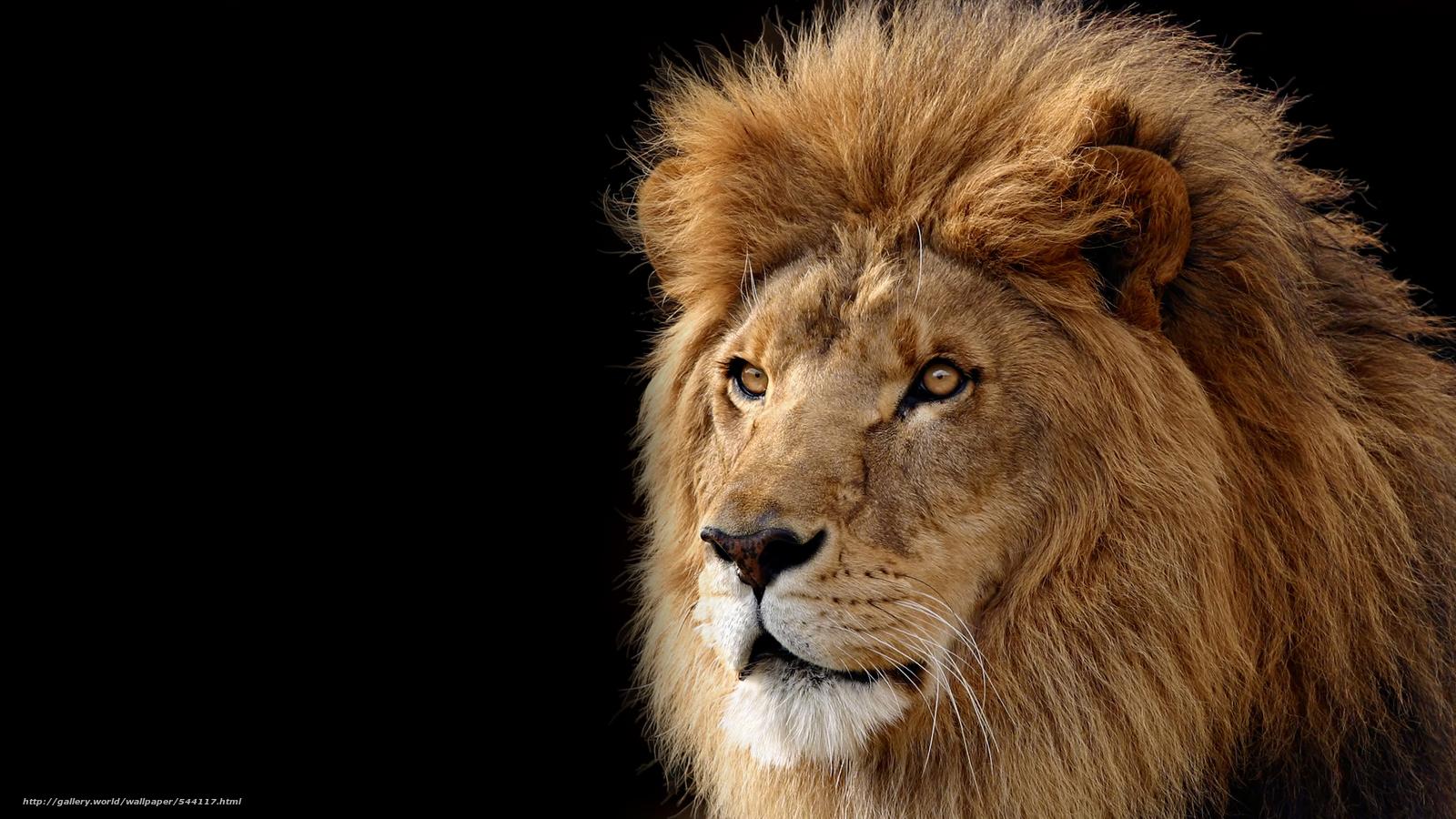 Descargar gratis león,  bestia,  hishnik Fondos de escritorio en la resolucin 3641x2048 — imagen №544117