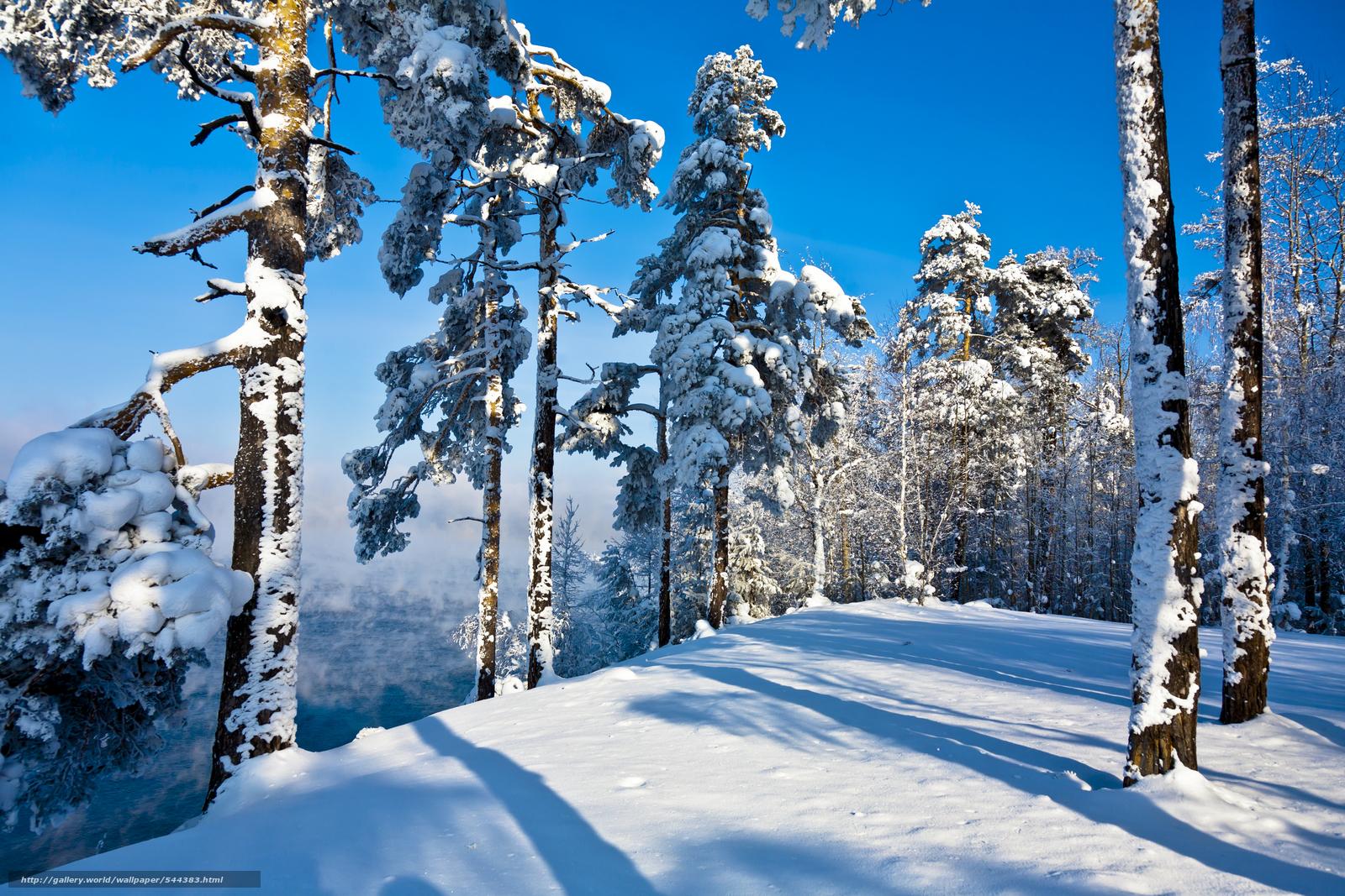 scaricare gli sfondi inverno,  alberi,  paesaggio Sfondi gratis per la risoluzione del desktop 4368x2912 — immagine №544383