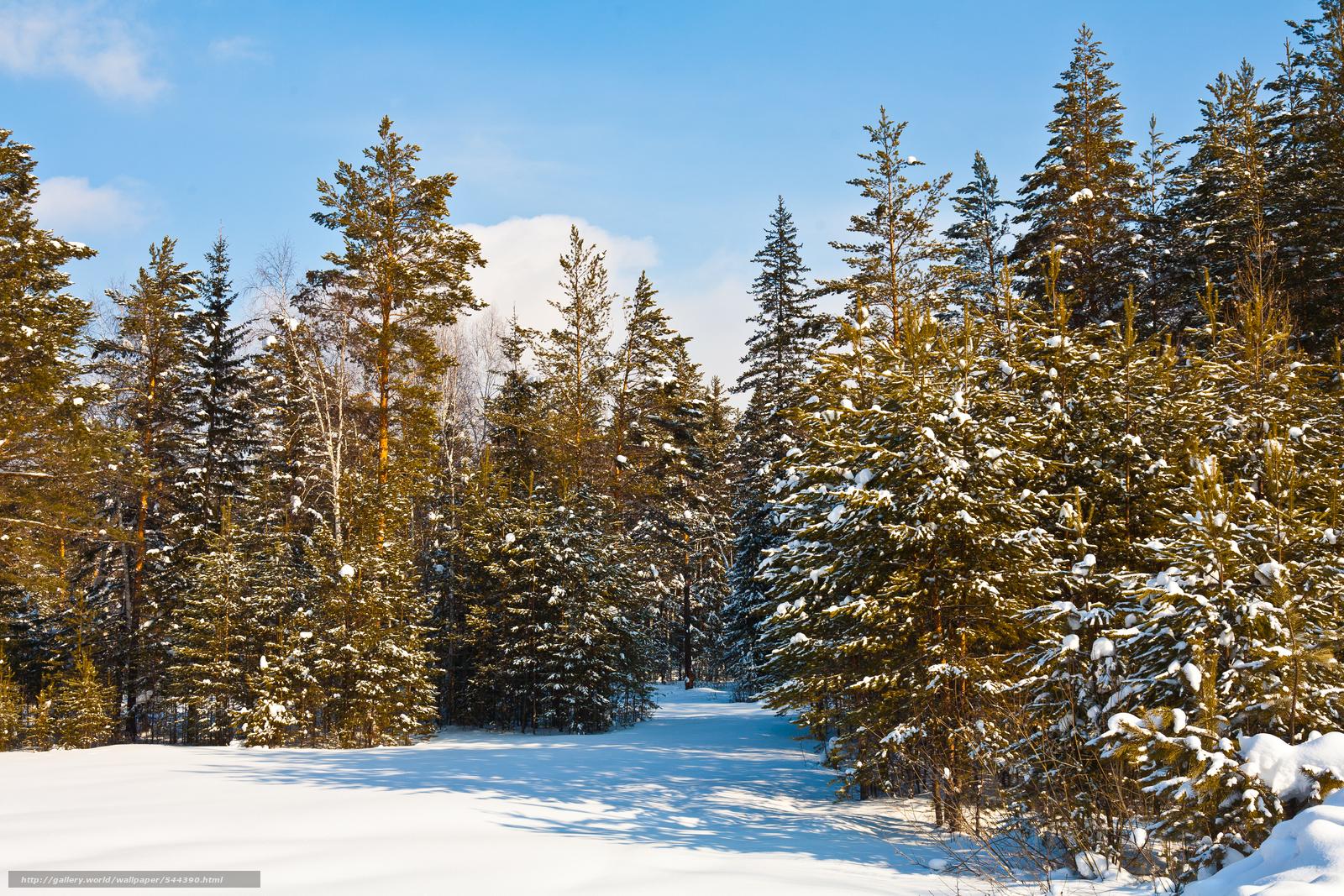 scaricare gli sfondi foresta,  inverno,  alberi,  paesaggio Sfondi gratis per la risoluzione del desktop 4368x2912 — immagine №544390
