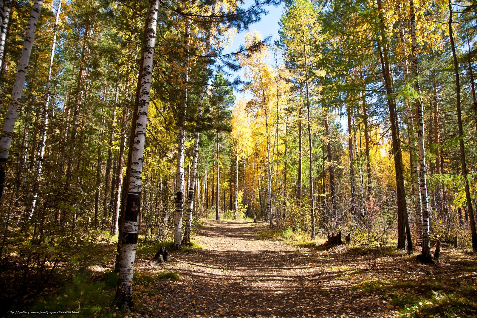 scaricare gli sfondi autunno,  foresta,  stradale,  paesaggio Sfondi gratis per la risoluzione del desktop 4368x2912 — immagine №544430