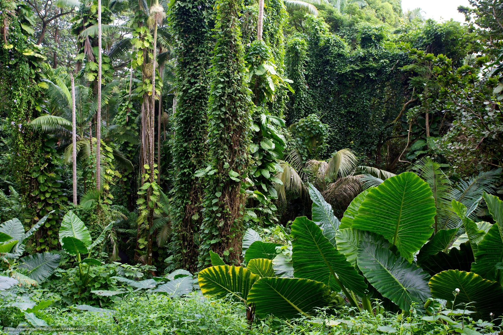 下载壁纸 夏威夷,  热带植物园,  花园 免费为您的桌面分辨率的壁纸 5760x3840 — 图片 №544453