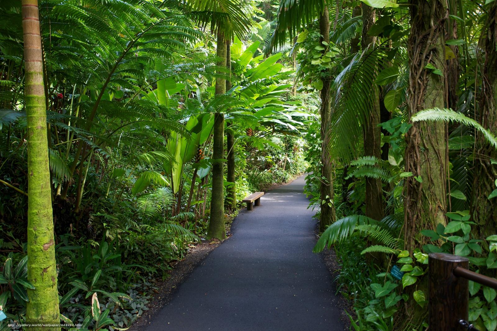 下载壁纸 夏威夷,  热带植物园,  花园,  性质 免费为您的桌面分辨率的壁纸 5760x3840 — 图片 №544461