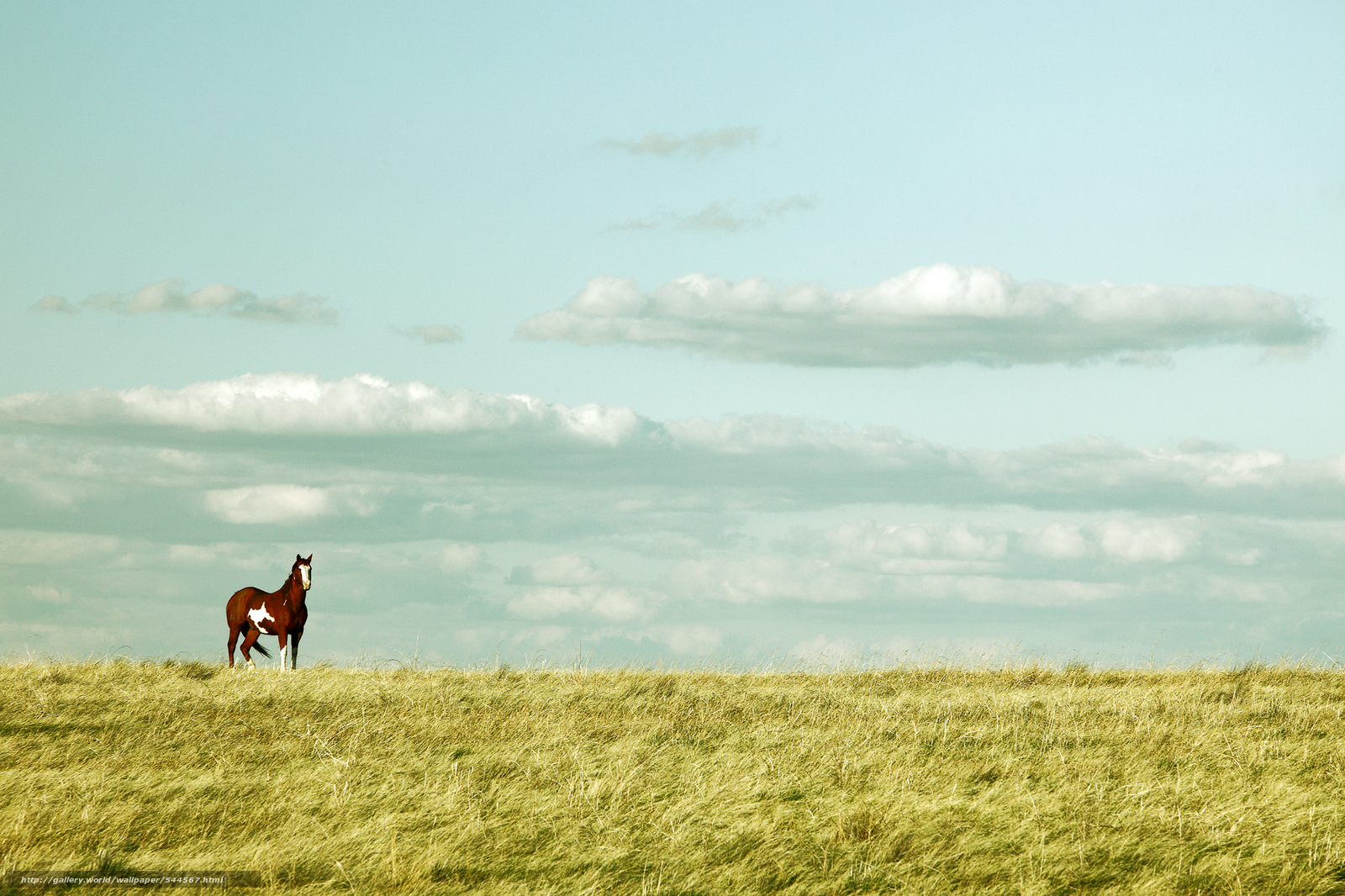 <b>Horses Wallpapers</b> - <b>Wallpaper</b> Cave