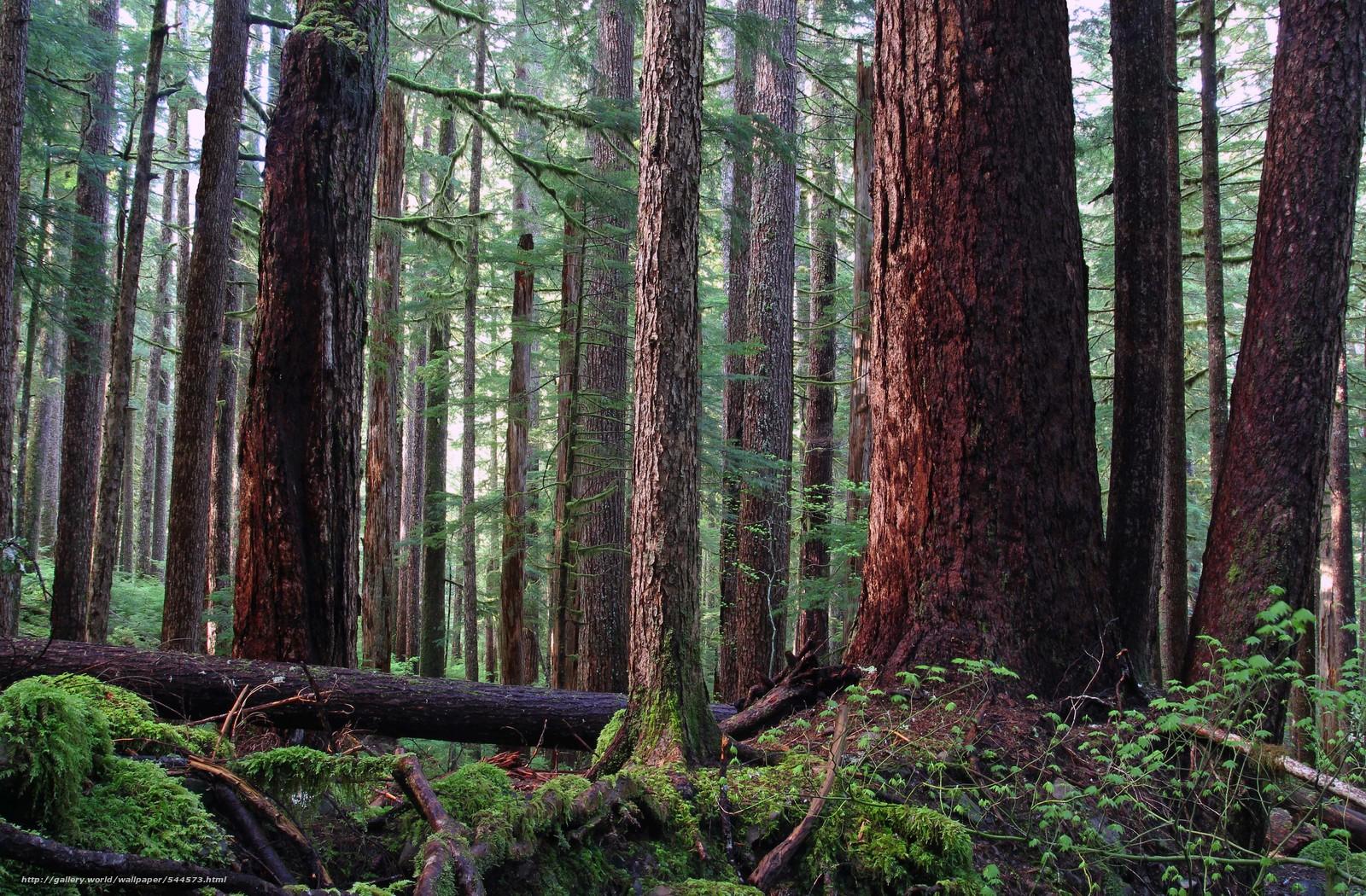 下载壁纸 森林,  树,  性质 免费为您的桌面分辨率的壁纸 4861x3189 — 图片 №544573