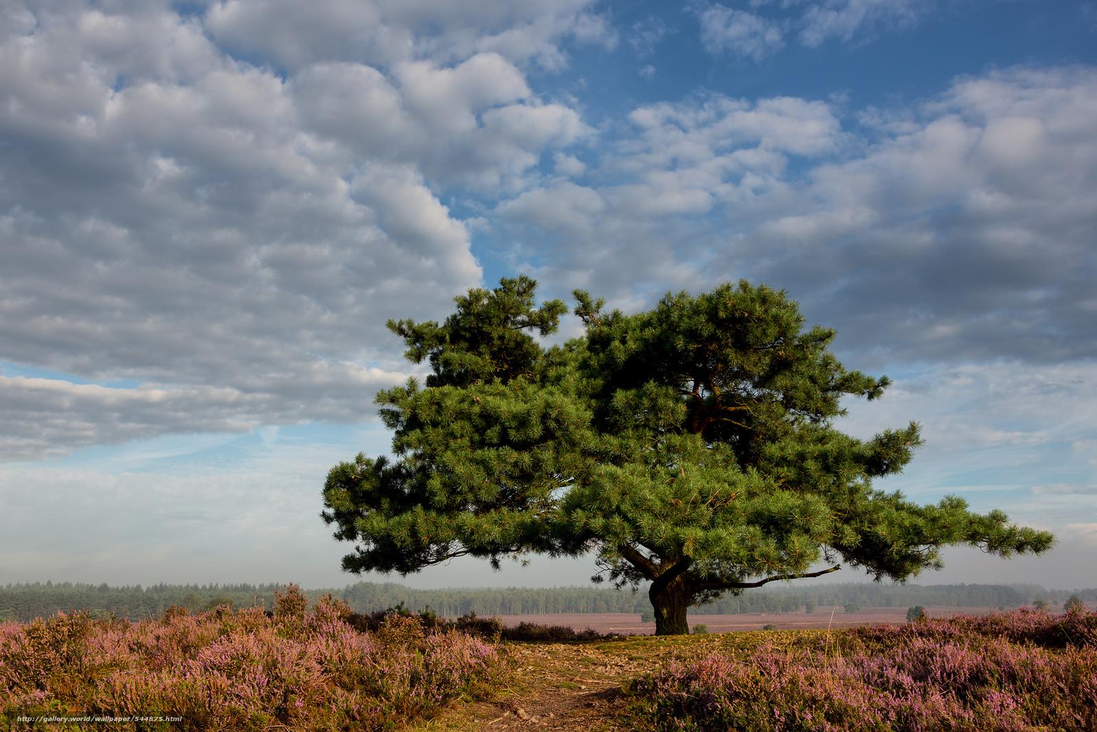 Tlcharger Fond d'ecran Solitaire arbre,  prairie,  Epe,  Pays-Bas Fonds d'ecran gratuits pour votre rsolution du bureau 1920x1280 — image №544875
