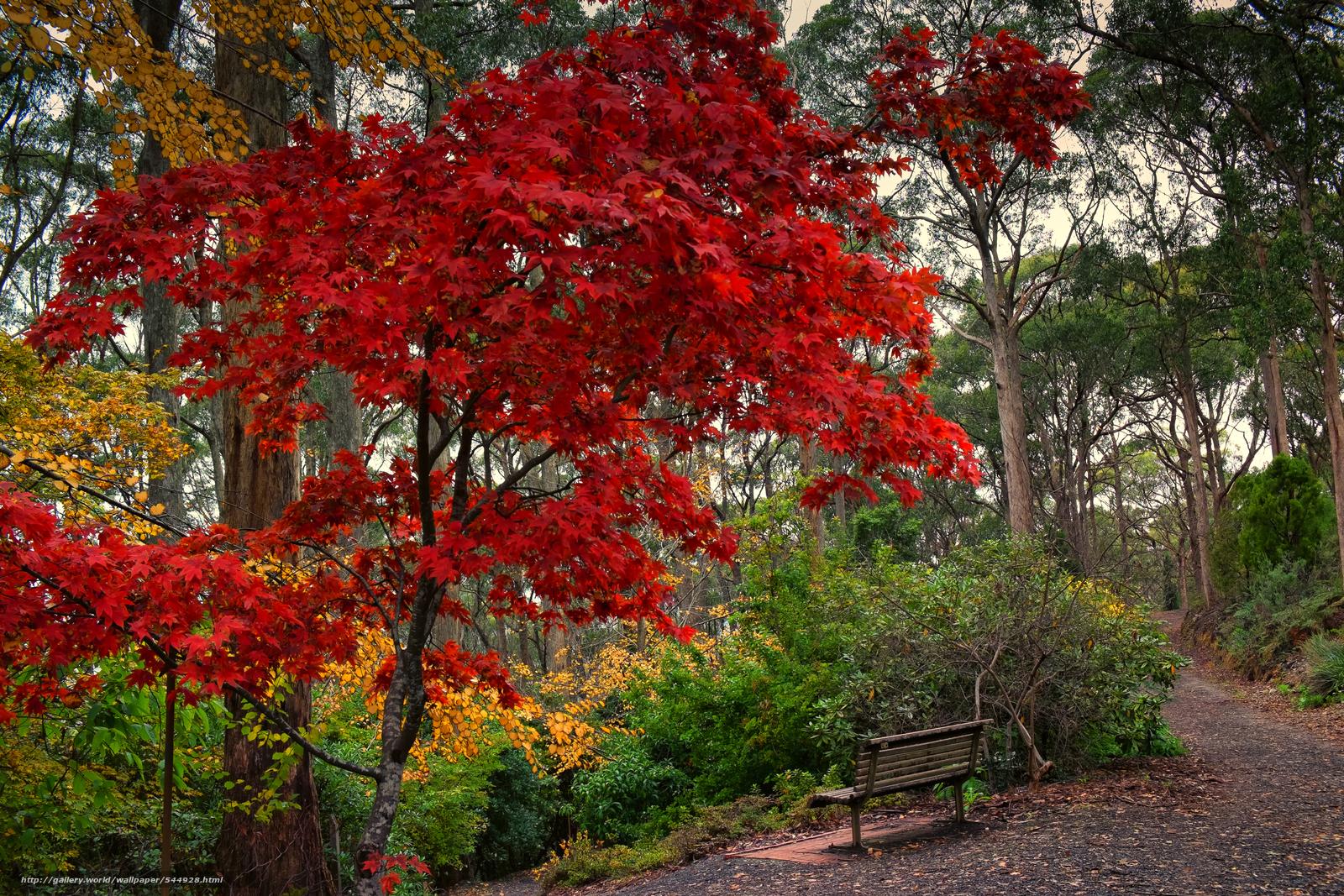Descargar gratis otoño,  parque,  árboles,  TRACK Fondos de escritorio en la resolucin 4822x3215 — imagen №544928
