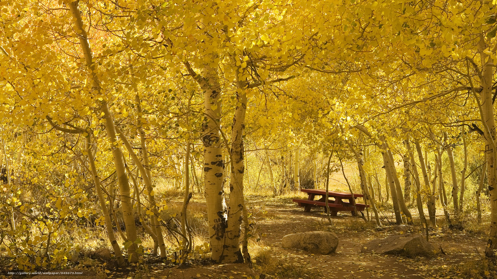 壁紙をダウンロード 秋 木 自然 テーブル デスクトップの解像度のための無料壁紙 19x1080 絵