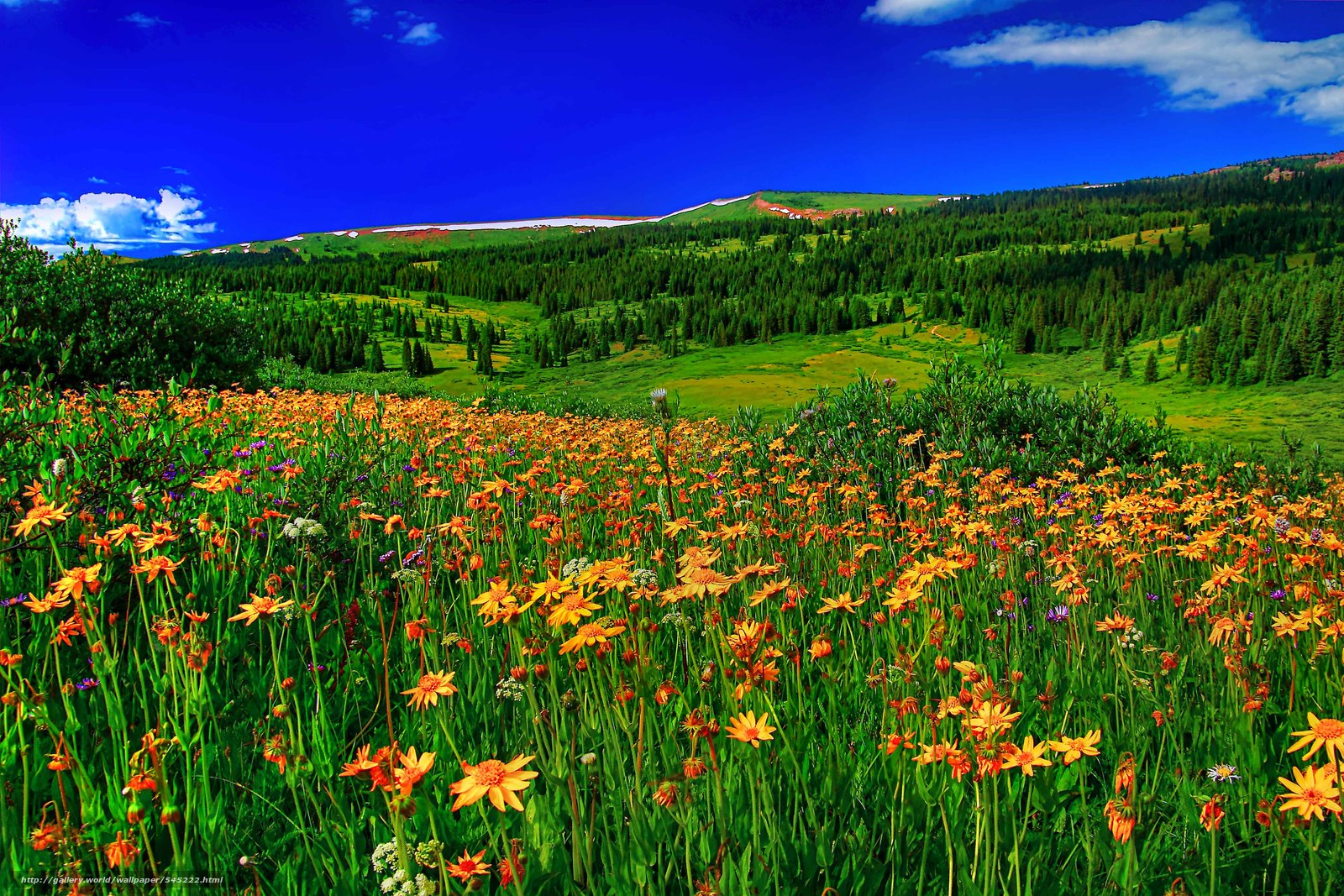 Холмы с цветами фото