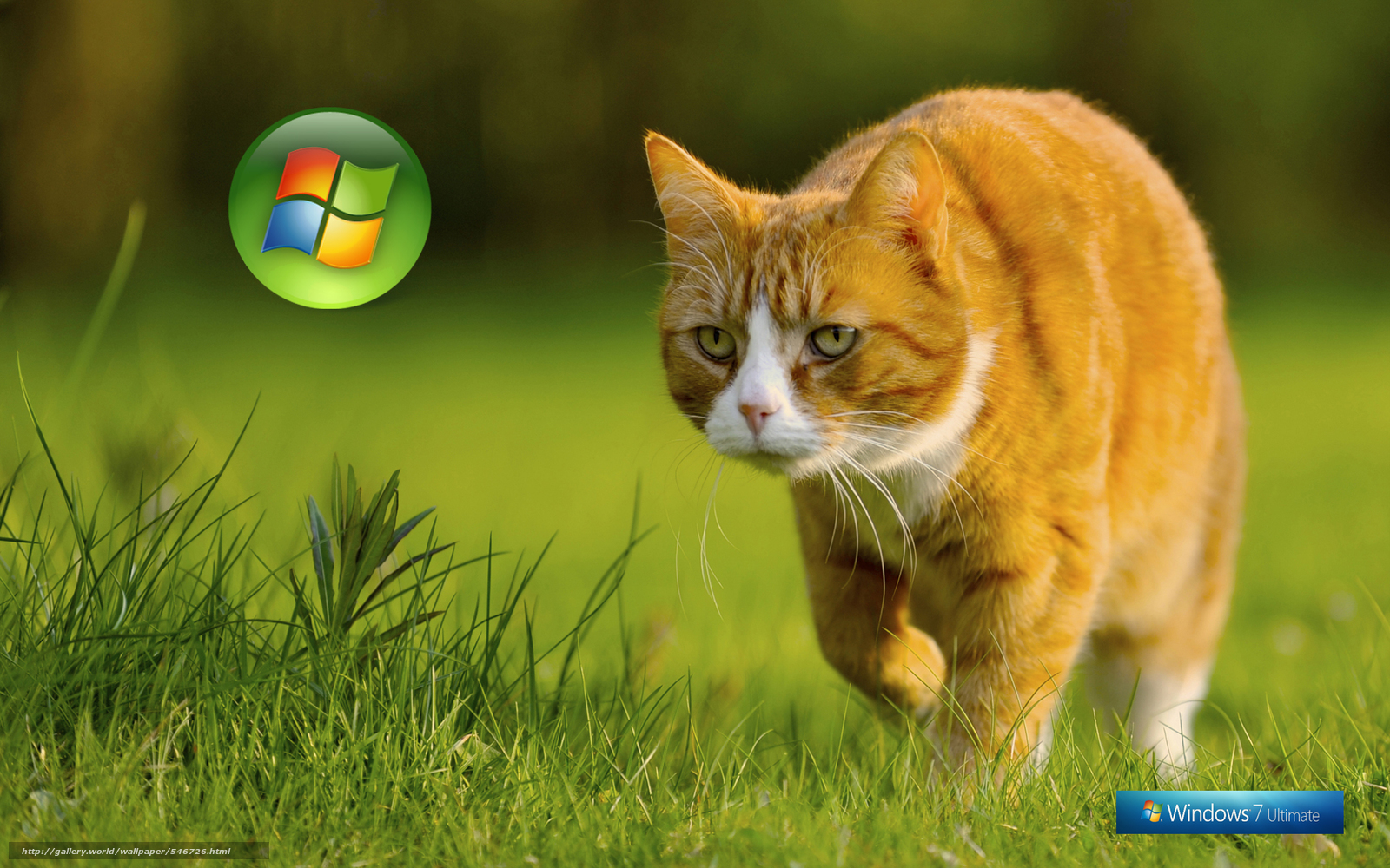 Обои windows 7 коты
