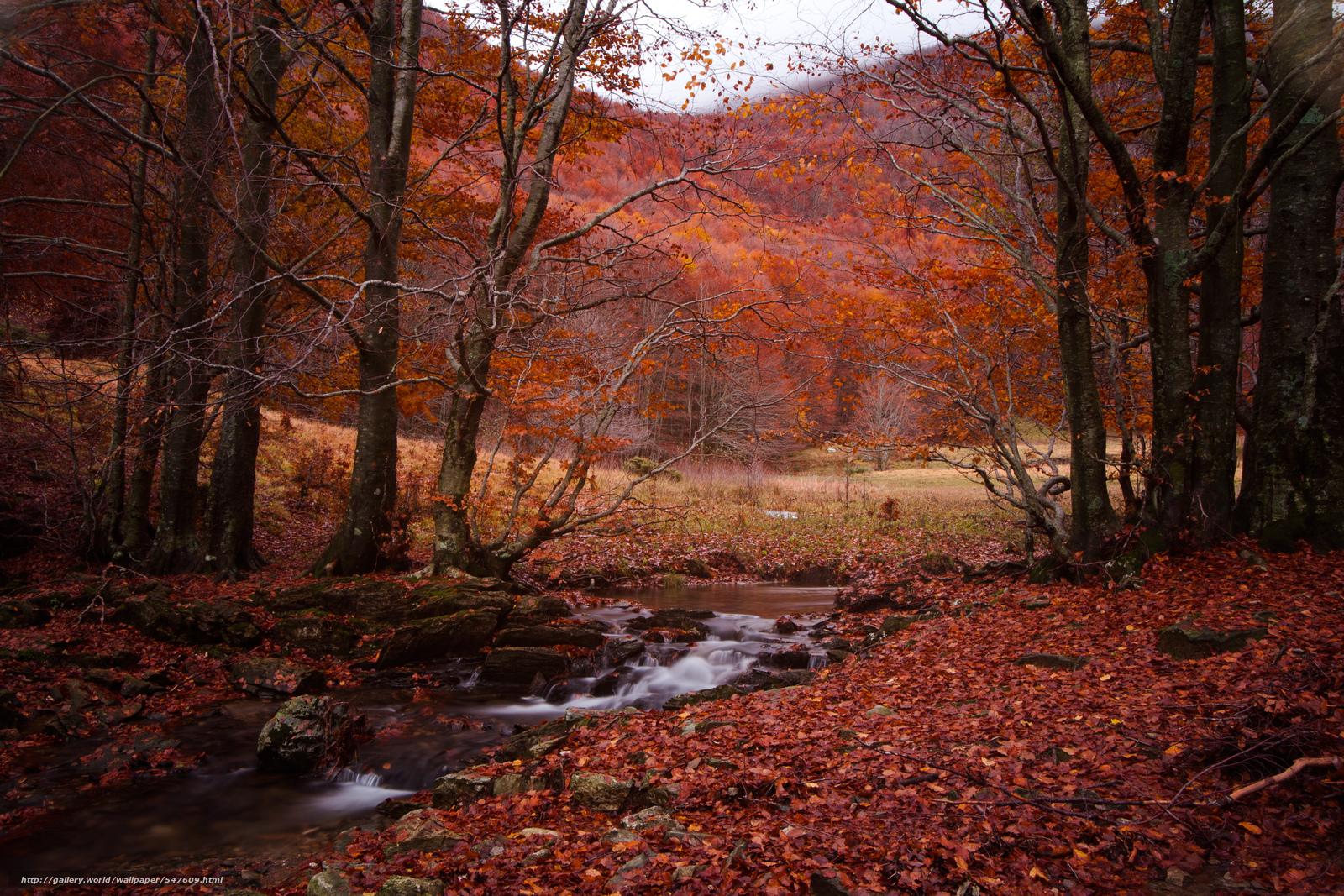 pobra tapety jesień,  las,  drzew,  Niewielka rzeka Darmowe tapety na pulpit rozdzielczoci 4073x2715 — zdjcie №547609