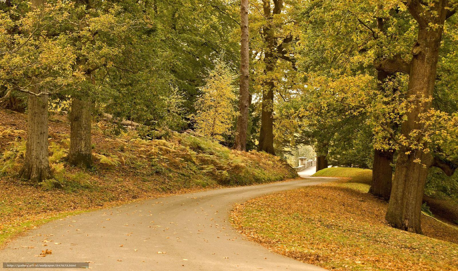 Descargar gratis carretera,  árboles,  otoño,  paisaje Fondos de escritorio en la resolucin 2048x1213 — imagen №547673